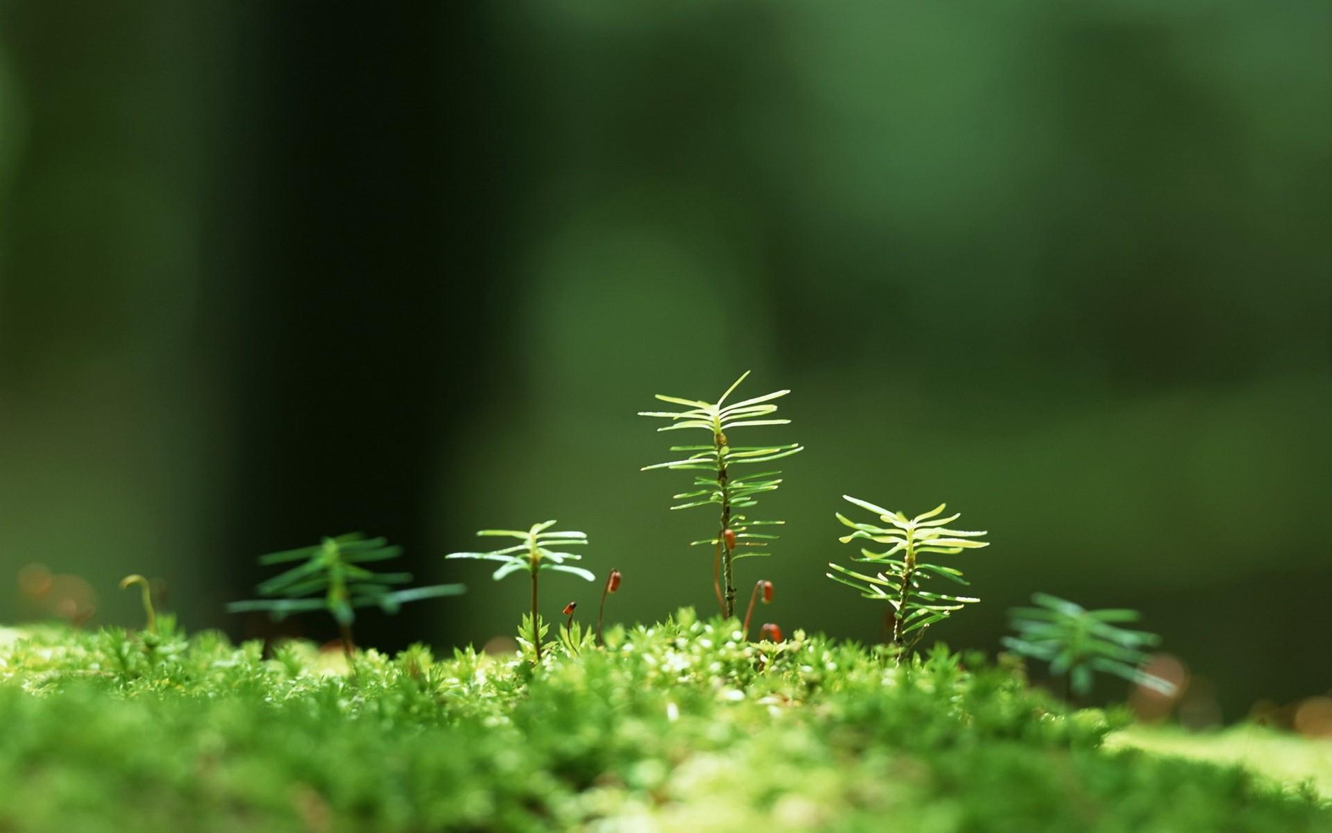 Трава макро съемка  № 3147949 бесплатно