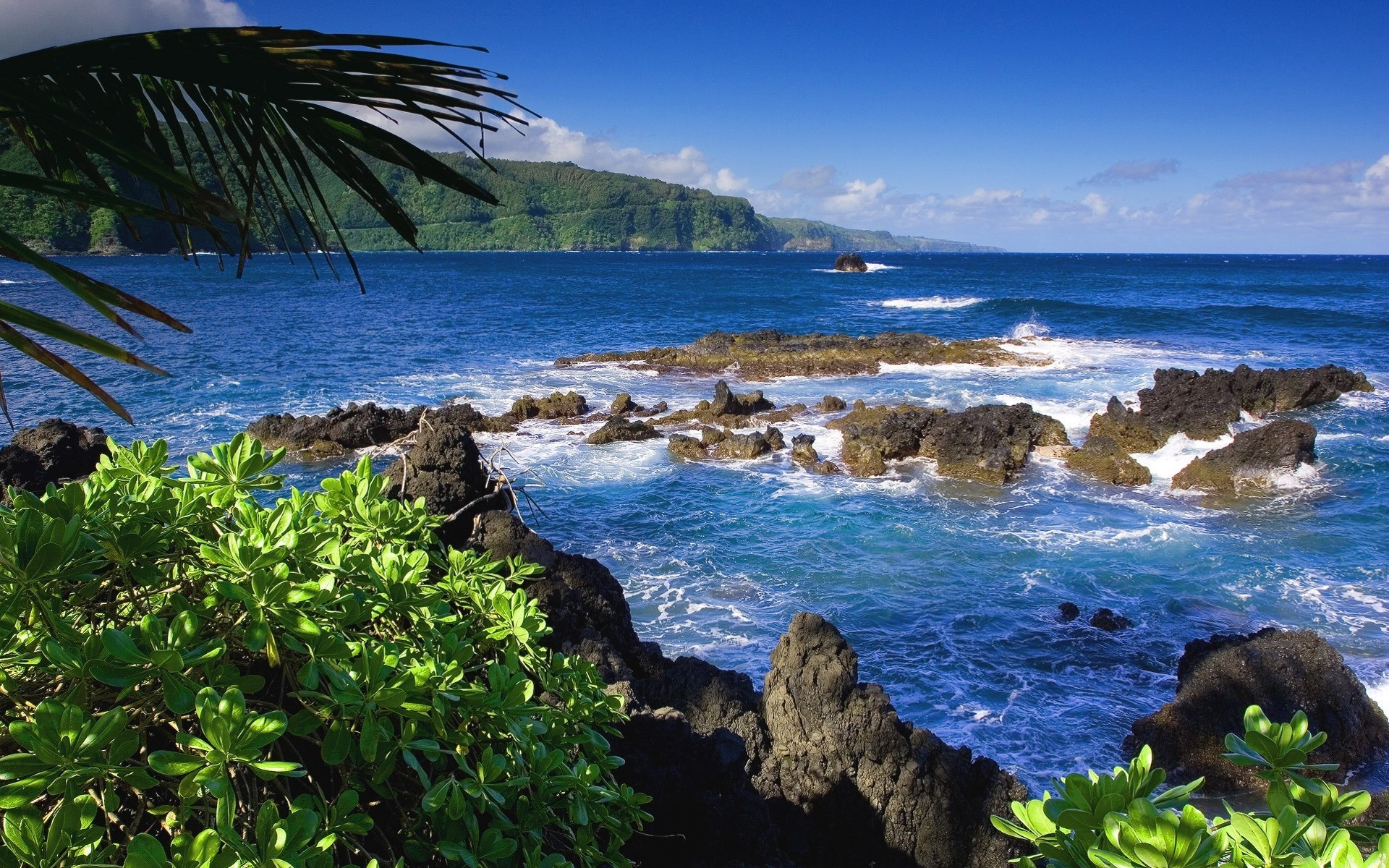 фото тропических берегов шартрез