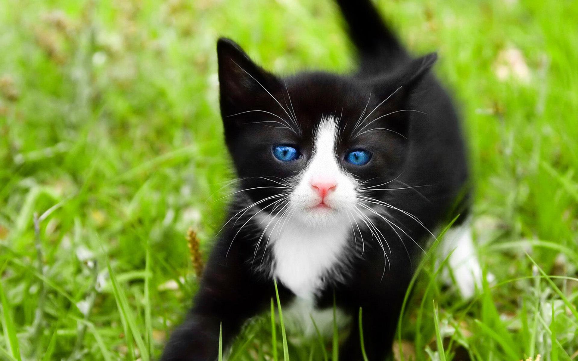 лучших черно белый котенок фото бывают только съемочных