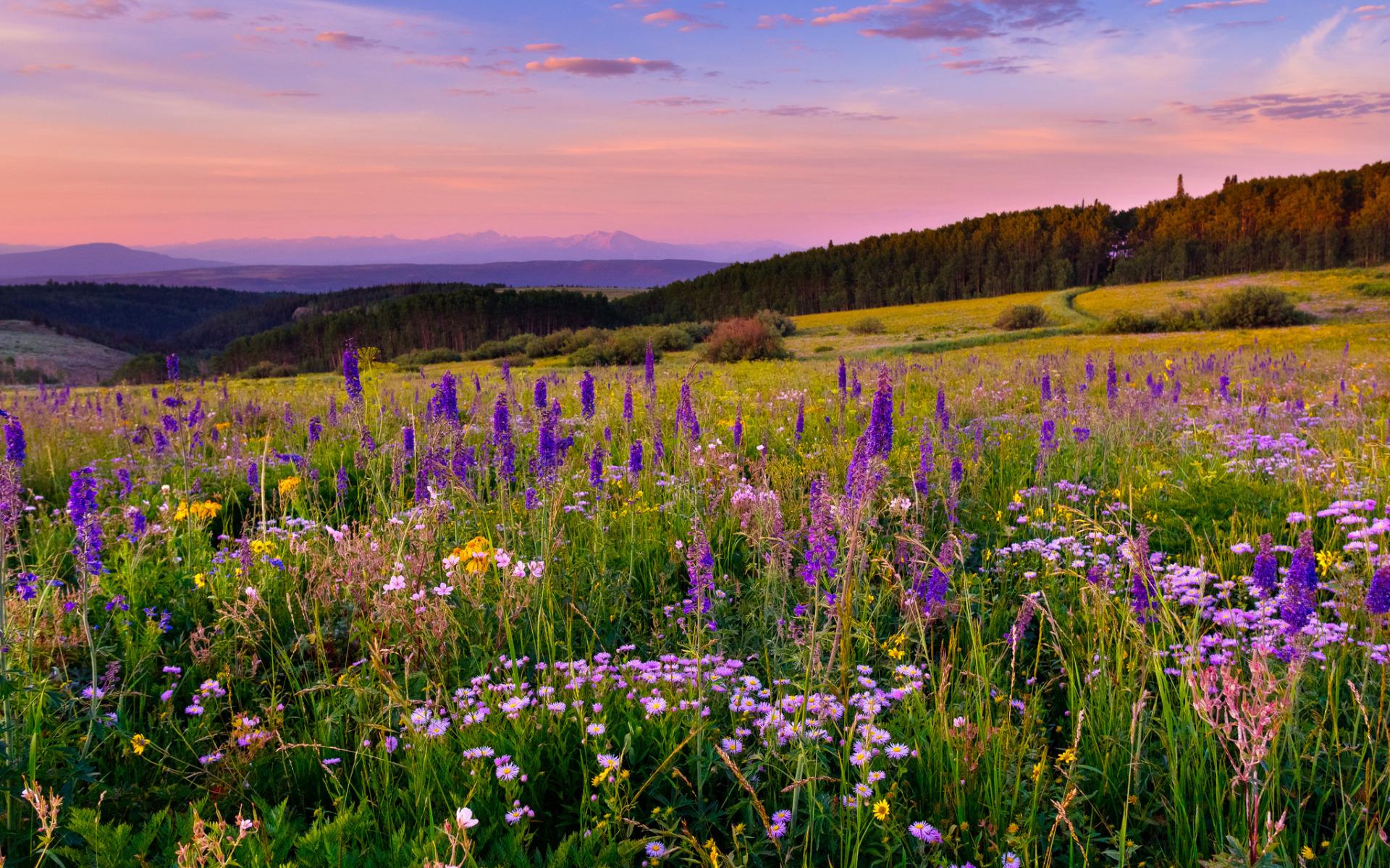 отеле фото пейзаж поле цветы сегодня вспомнила про