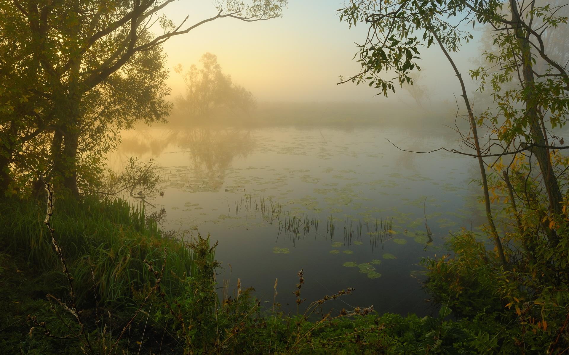 Туман над лесной речкой  № 636697 загрузить