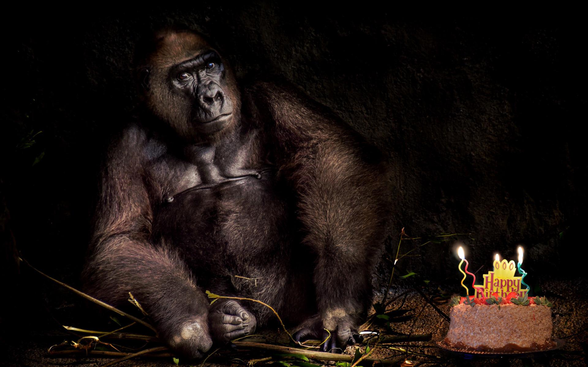 Фото открытки с обезьяной
