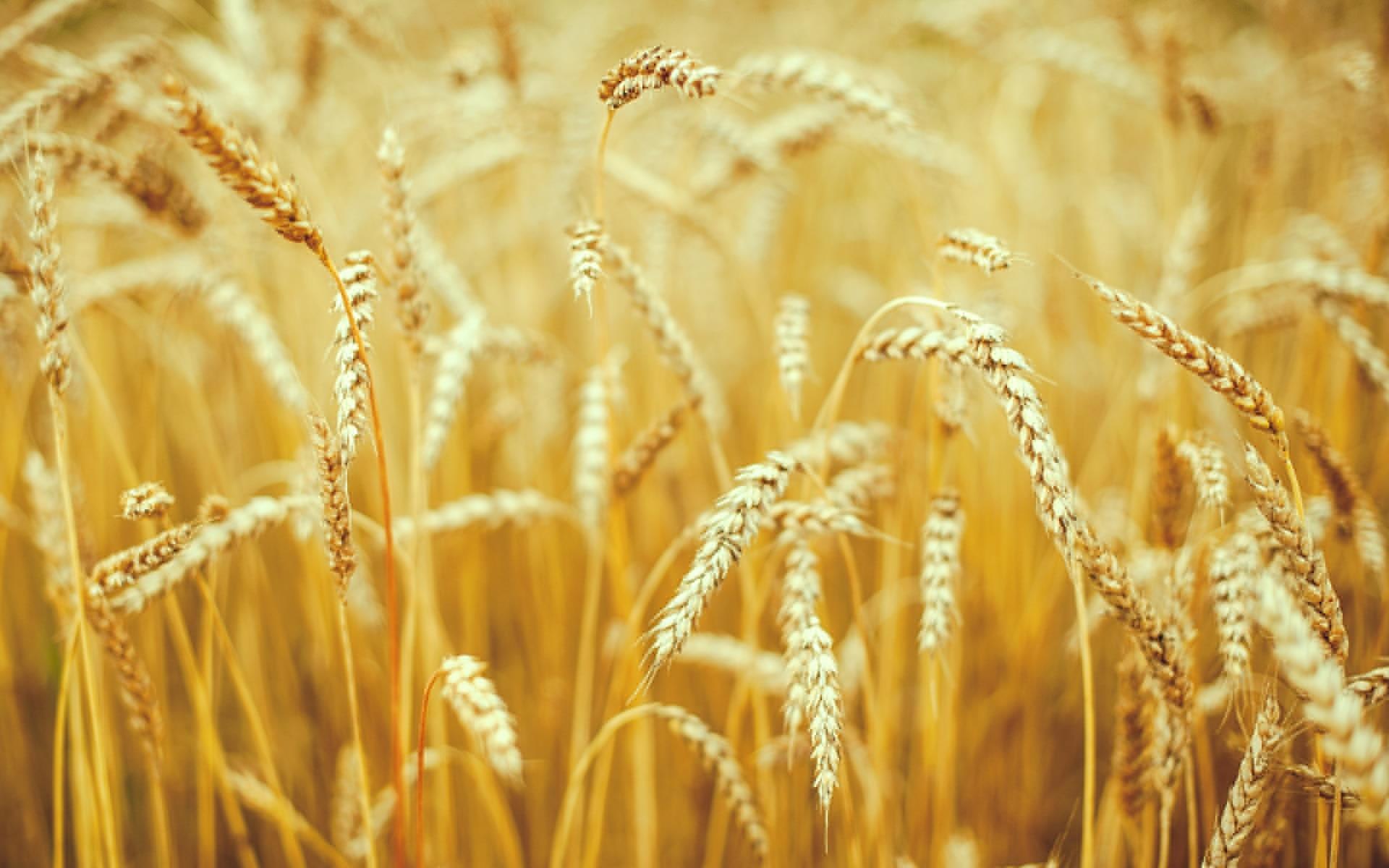 Дню, фоны на открытки сельское хозяйство