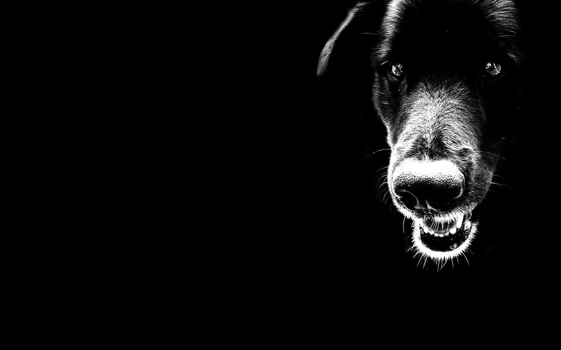 Пёс черный взгляд  № 1127482  скачать