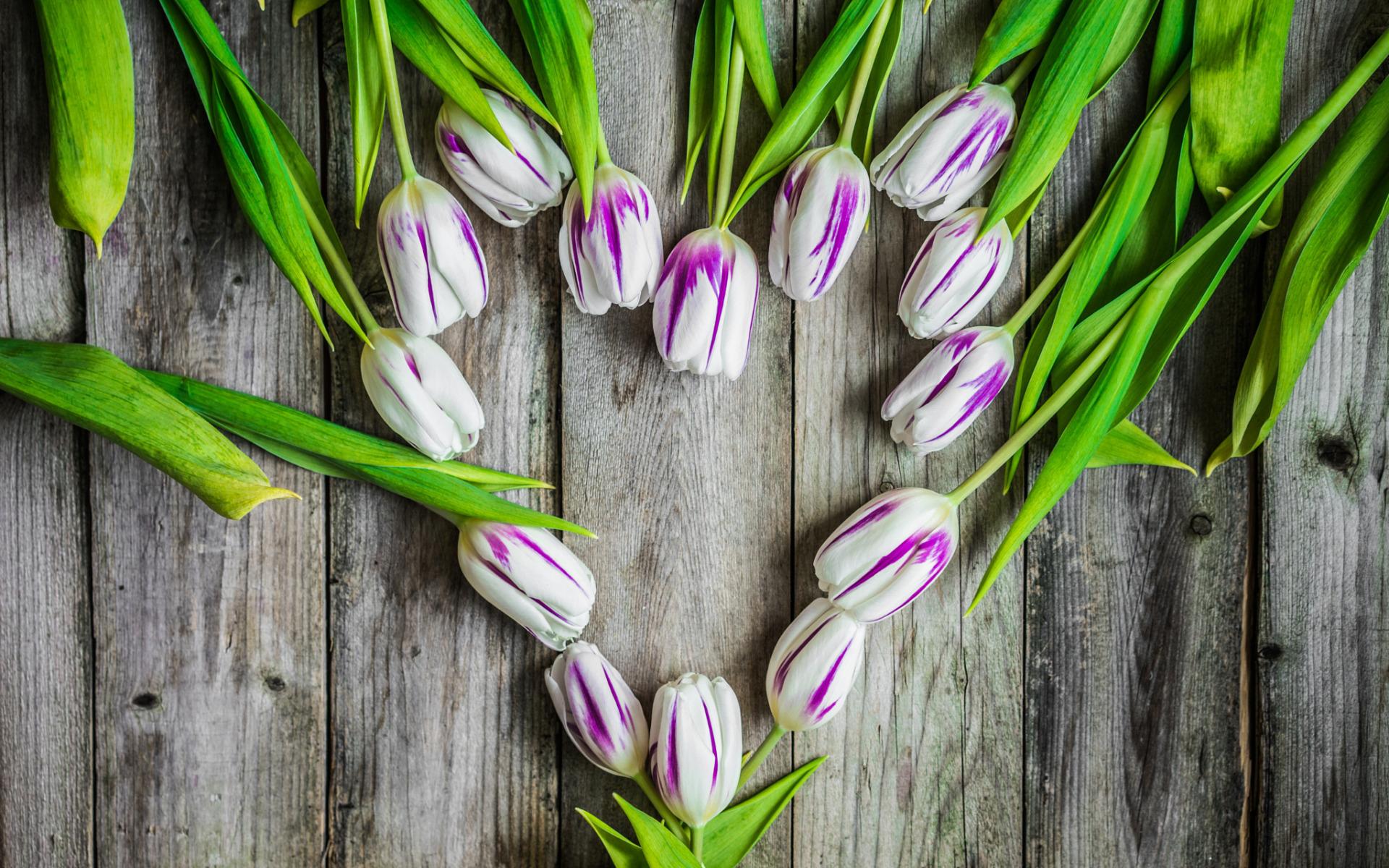 тюльпаны в коробке картинки на фоне полосатых обоев сиреневых аниме