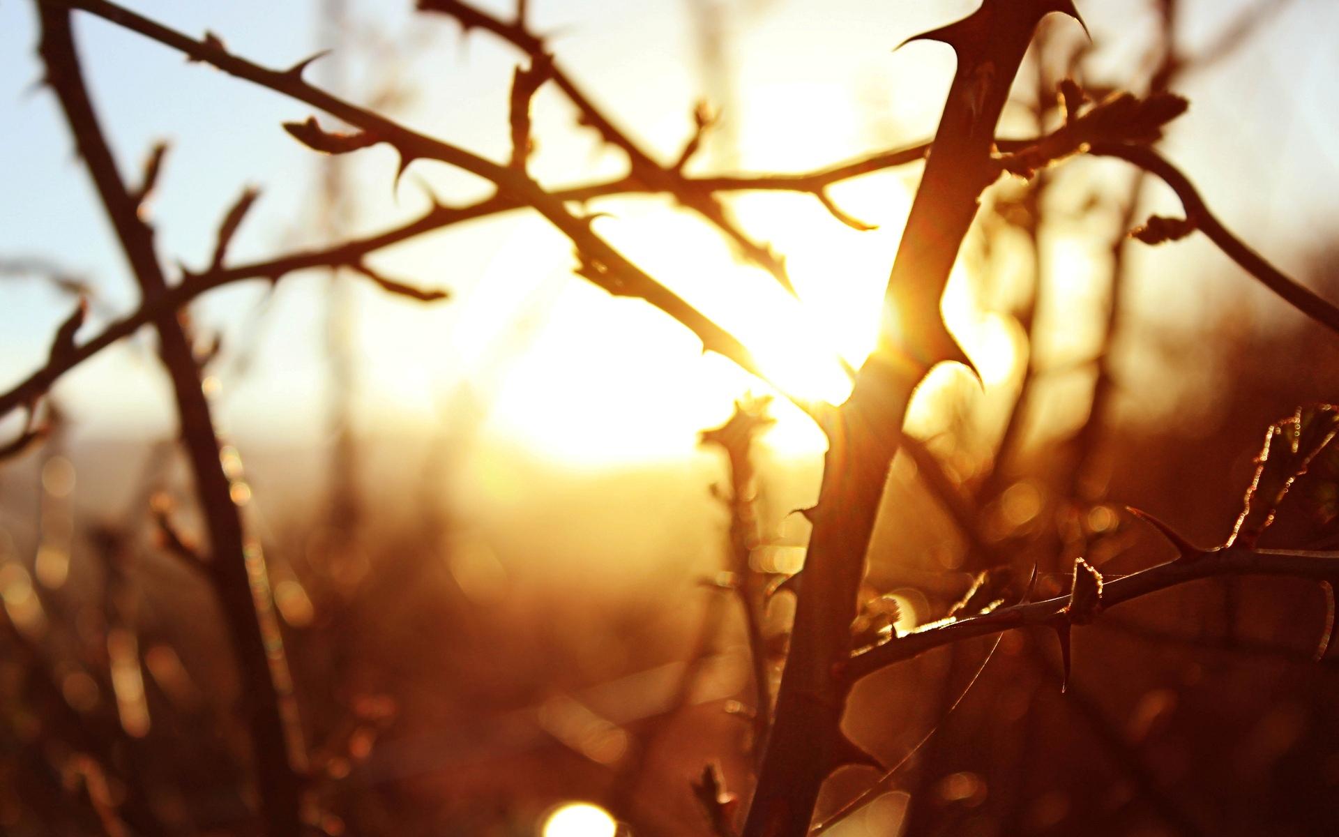 деревья природа ветка trees nature branch  № 439578 без смс