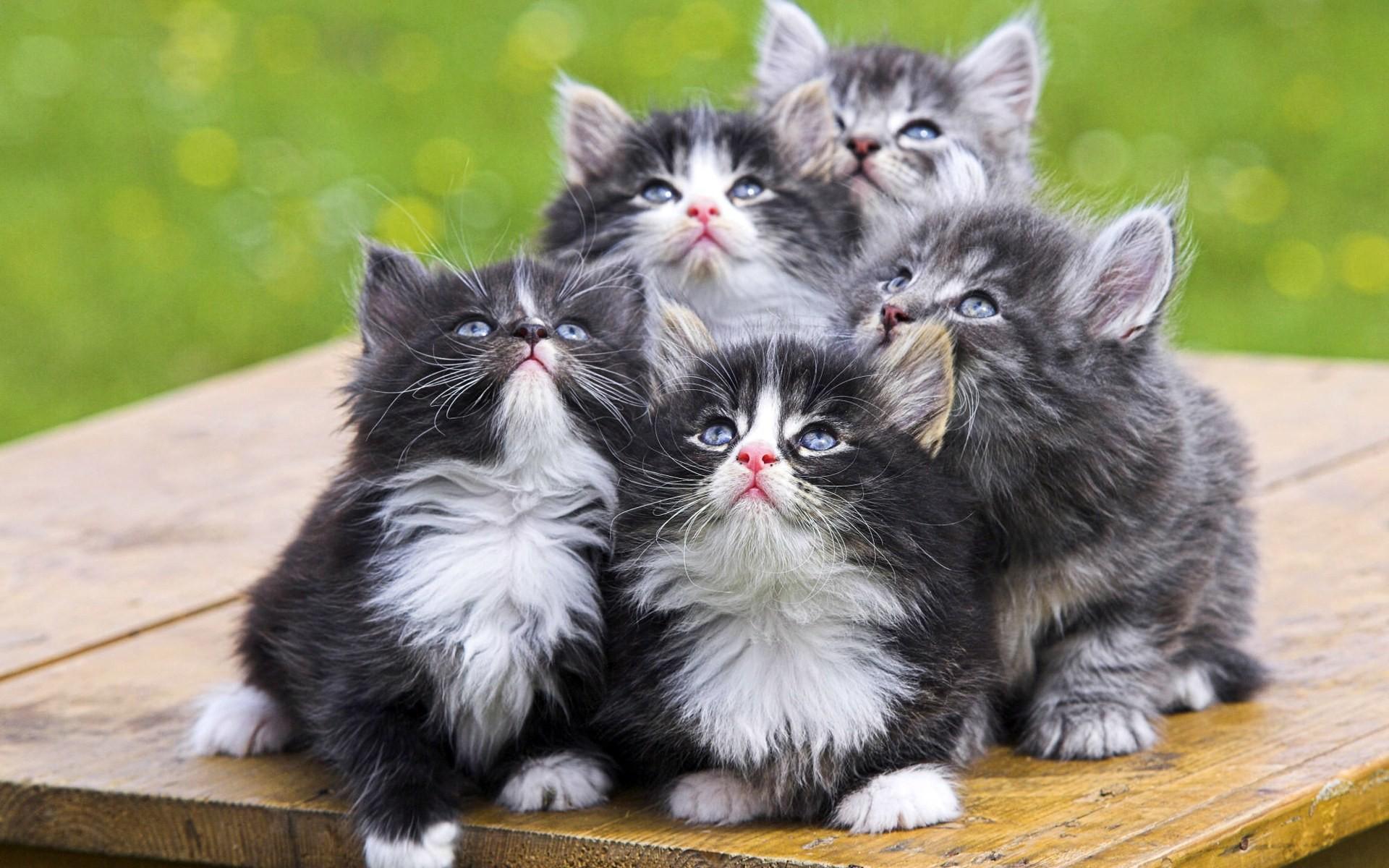 прикольные котята закрыли