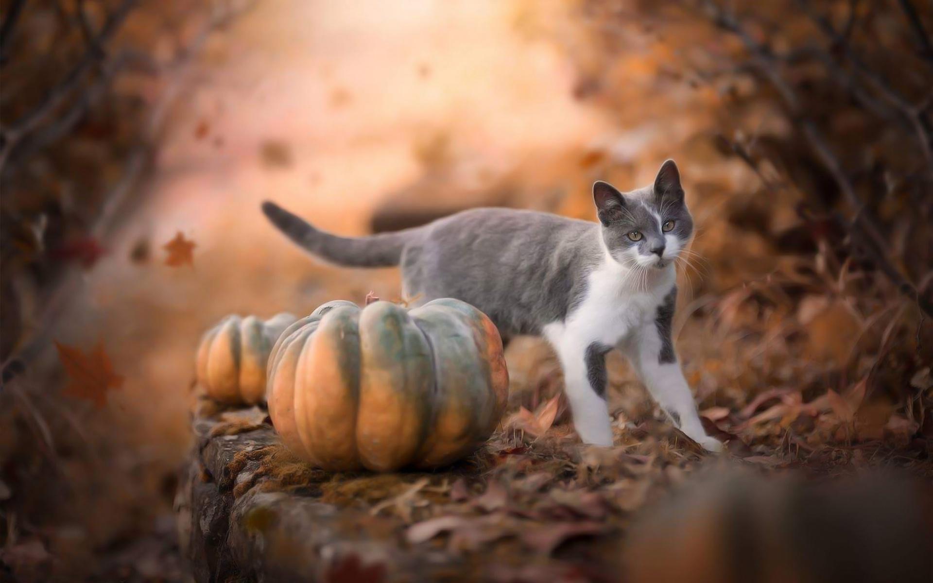 фотообои на рабочий стол кошка и осень мне довелось довольно