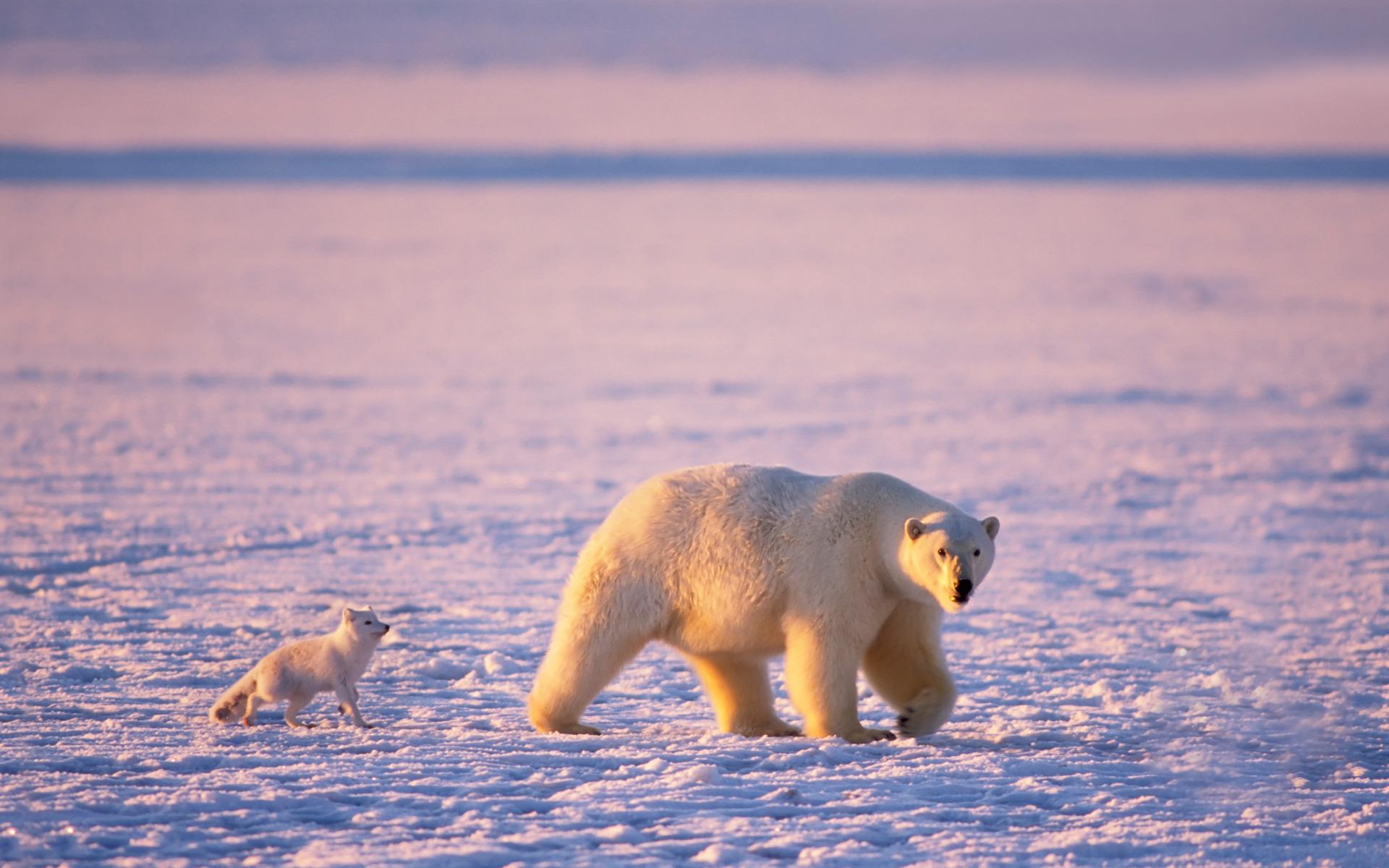 Картинки приколы арктика, фото девушки
