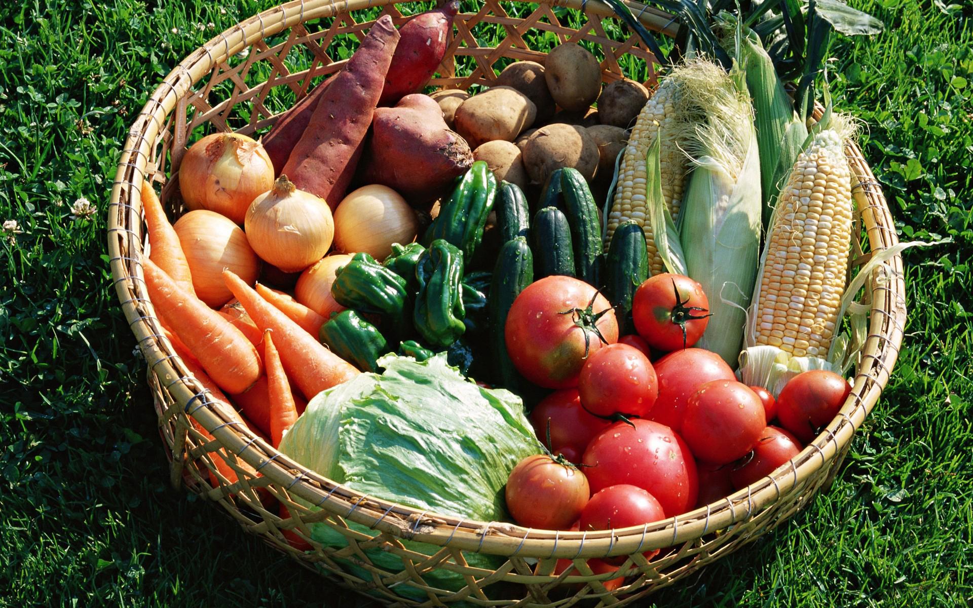 картинки только помидоров огурцов и морковь