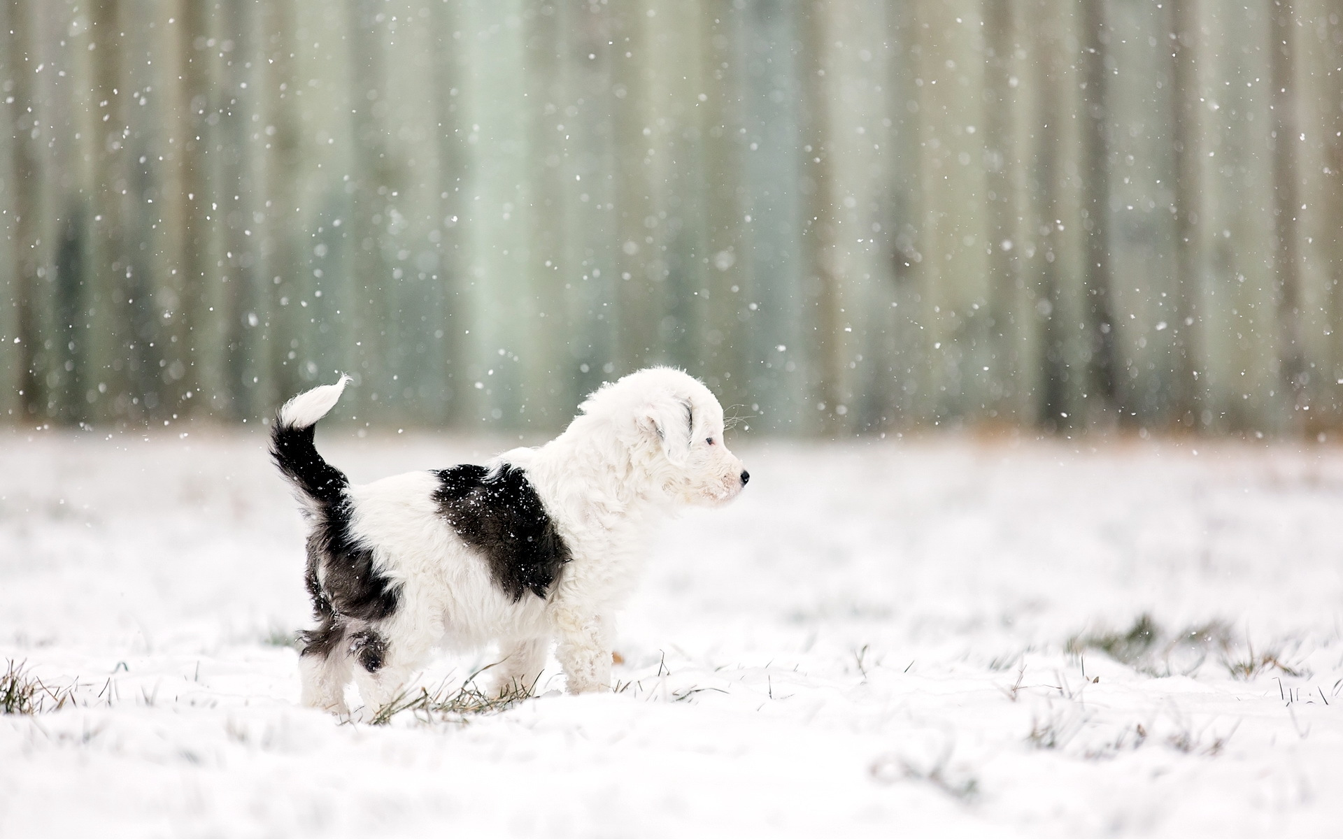 Фотки собачки в снегу