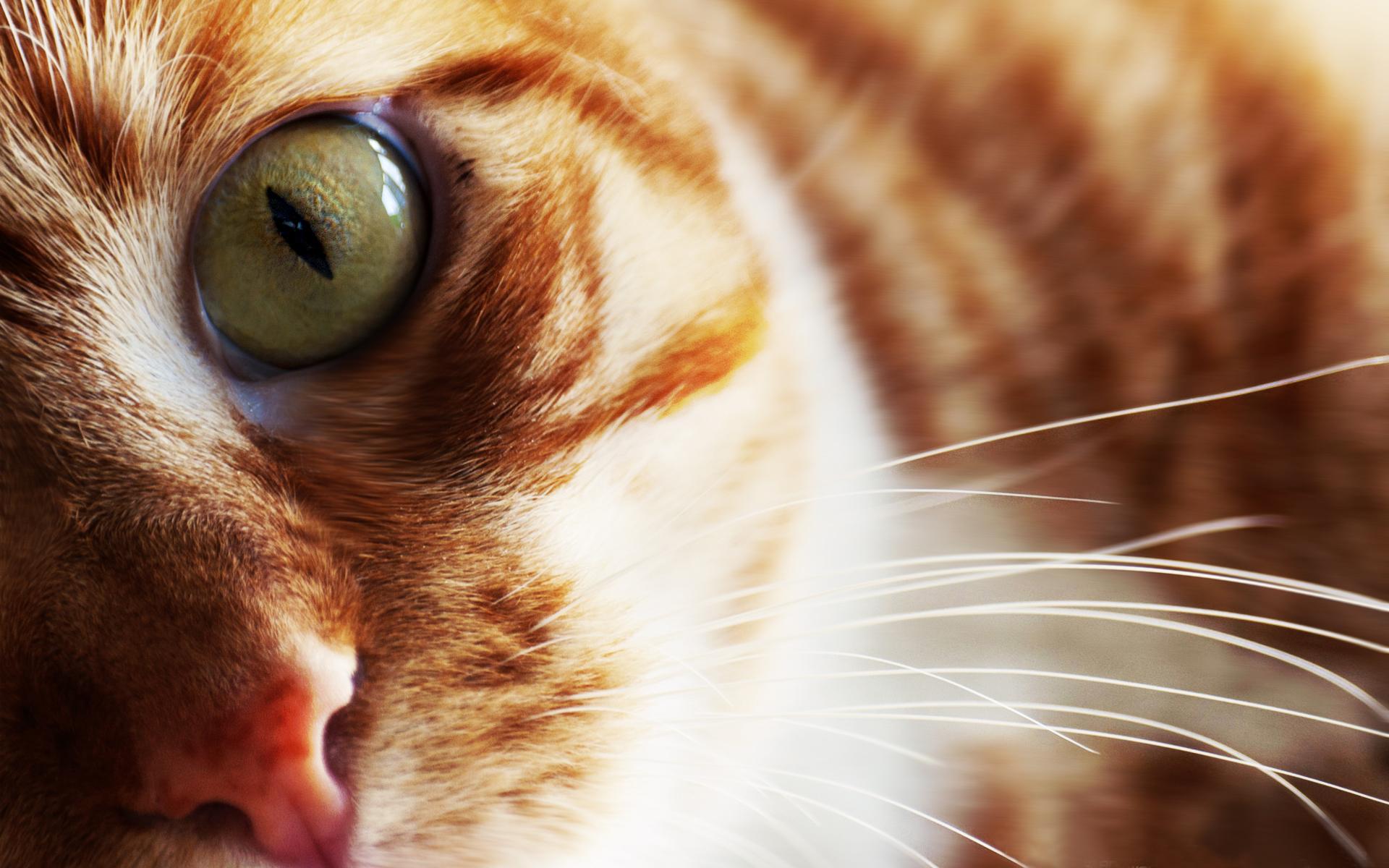 кошка зеленые глаза постель  № 3655497  скачать
