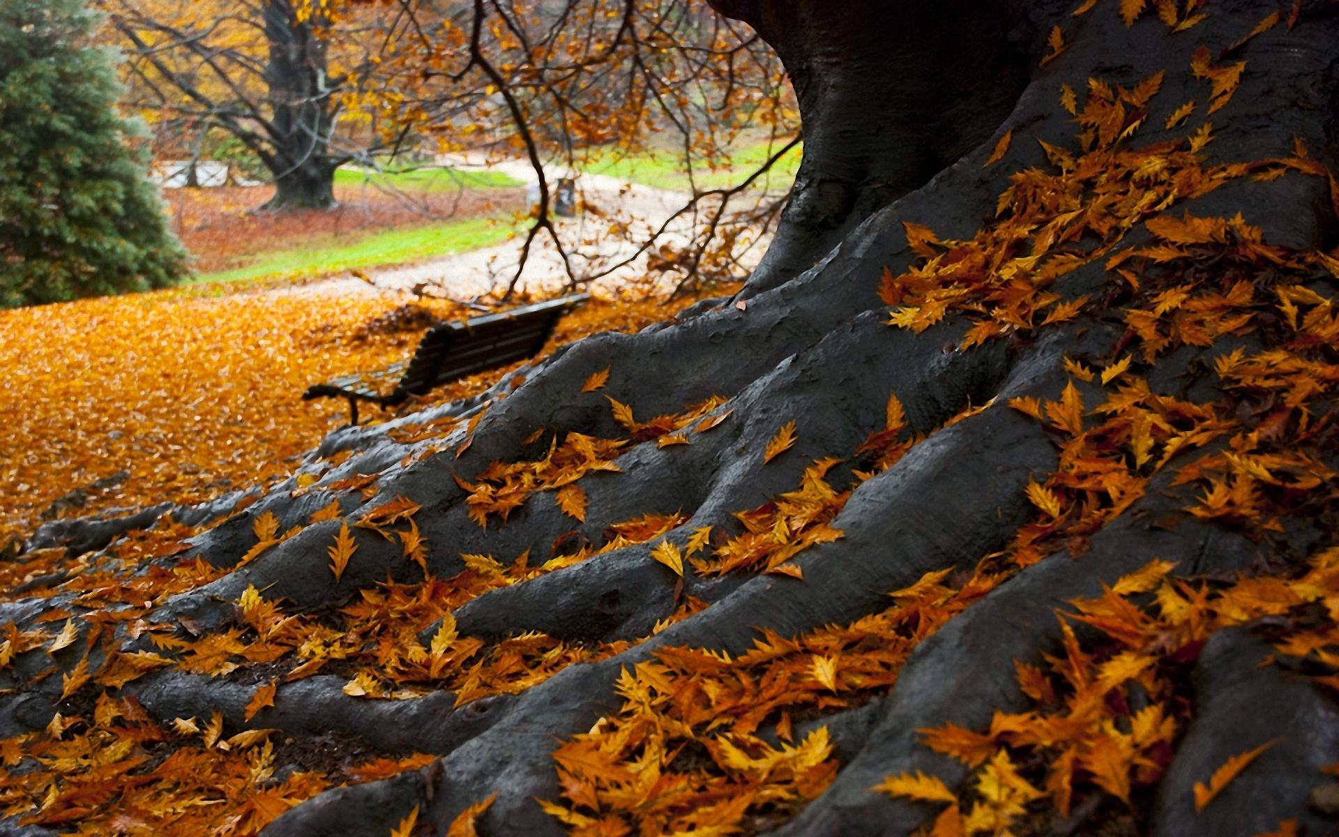 дерево листья парк  № 438462 бесплатно
