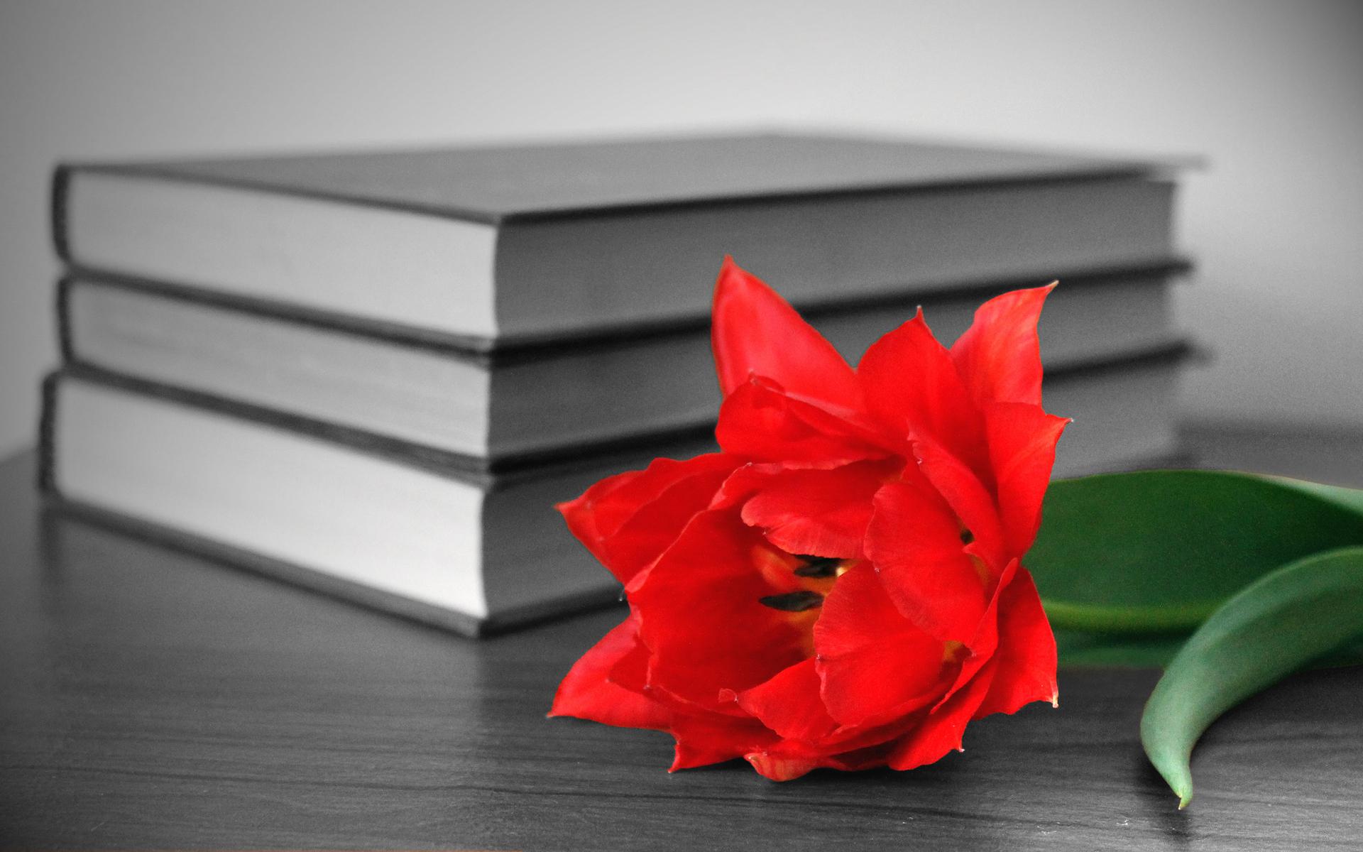 есть картинки для обложки книги цветы мебели