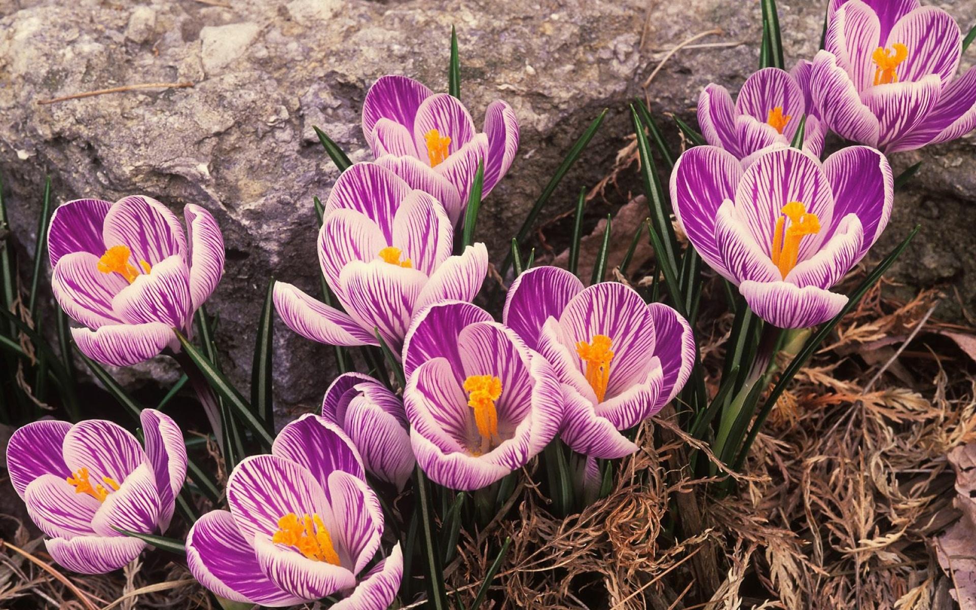 Очень, цветы весна картинки обои