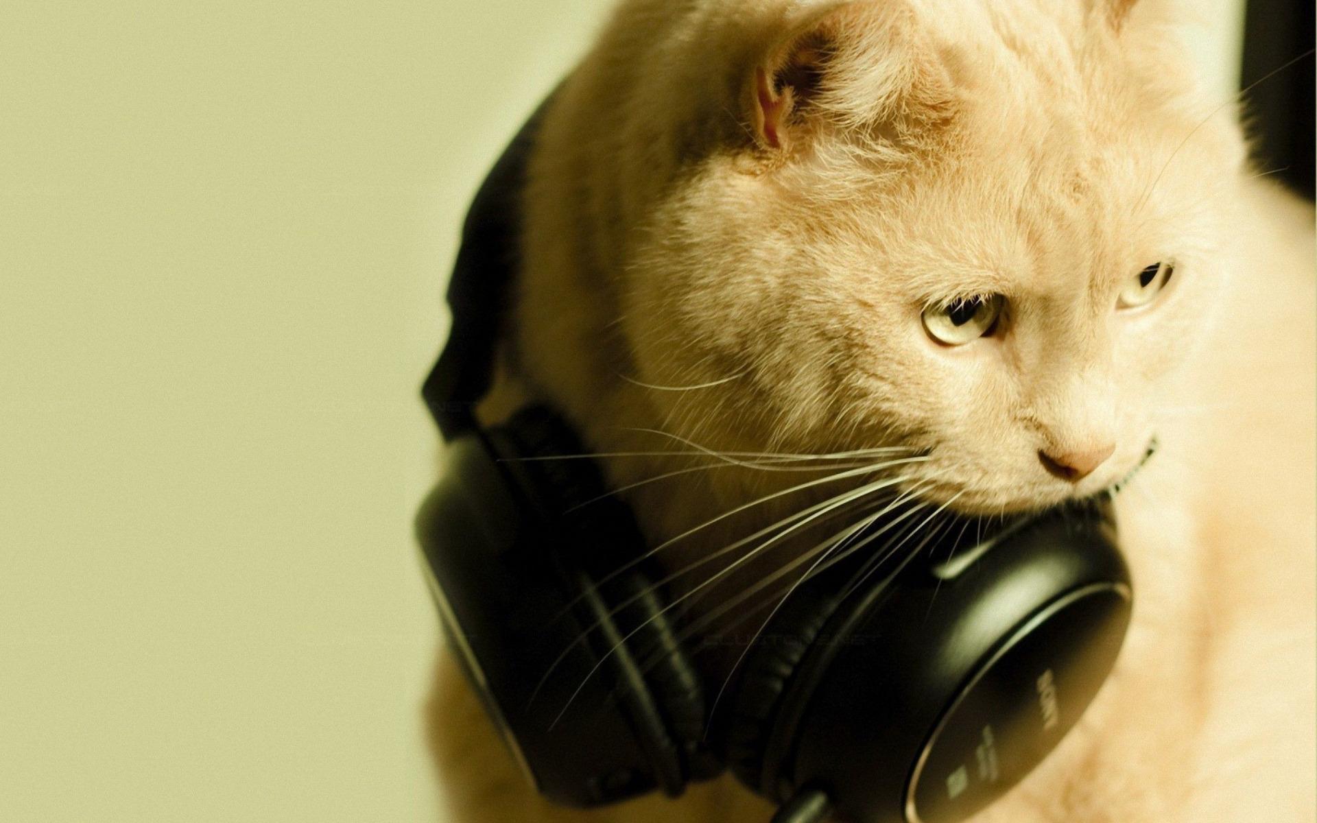 Картинки котенок слушает музыку