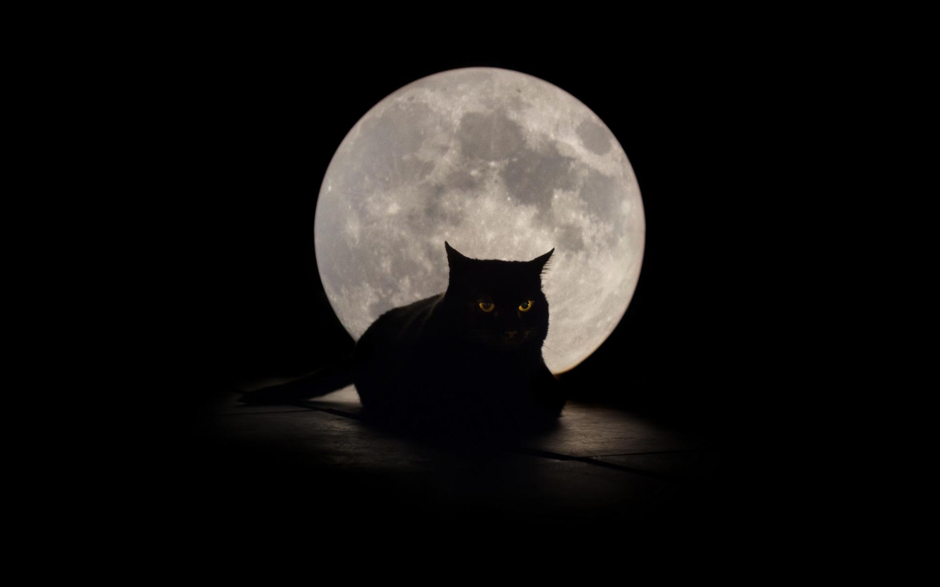 луна кот обои на рабочий стол № 573617  скачать