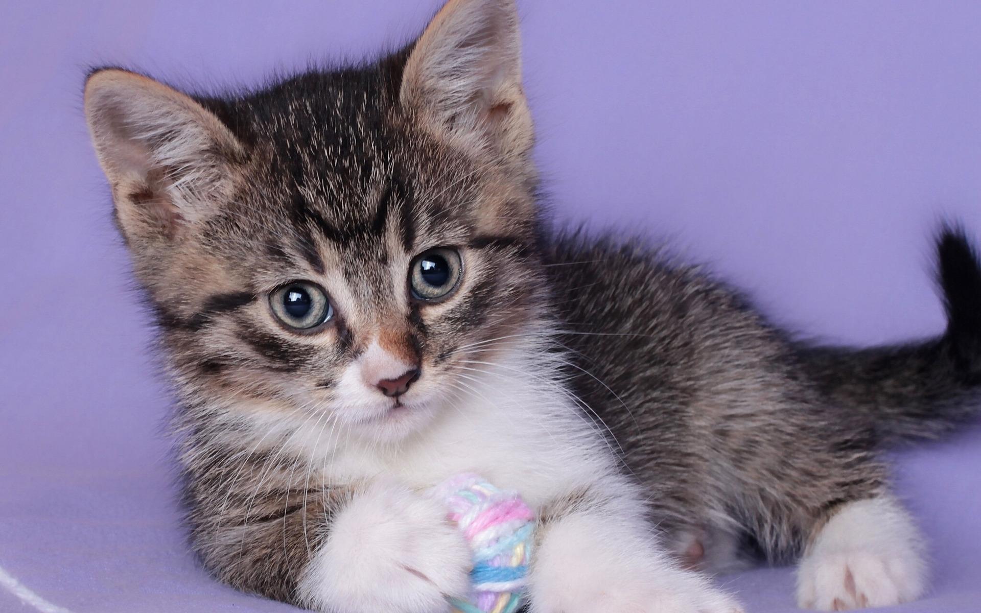 Картинки дети котята