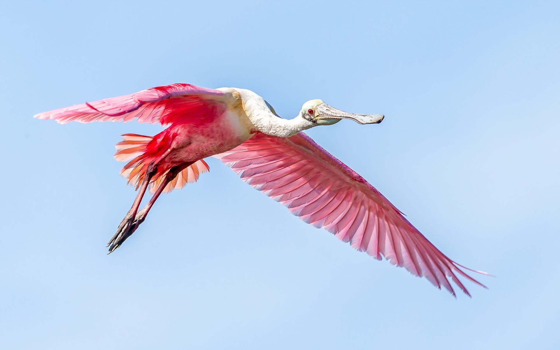 Днем рождения, картинки красивых птиц в полете