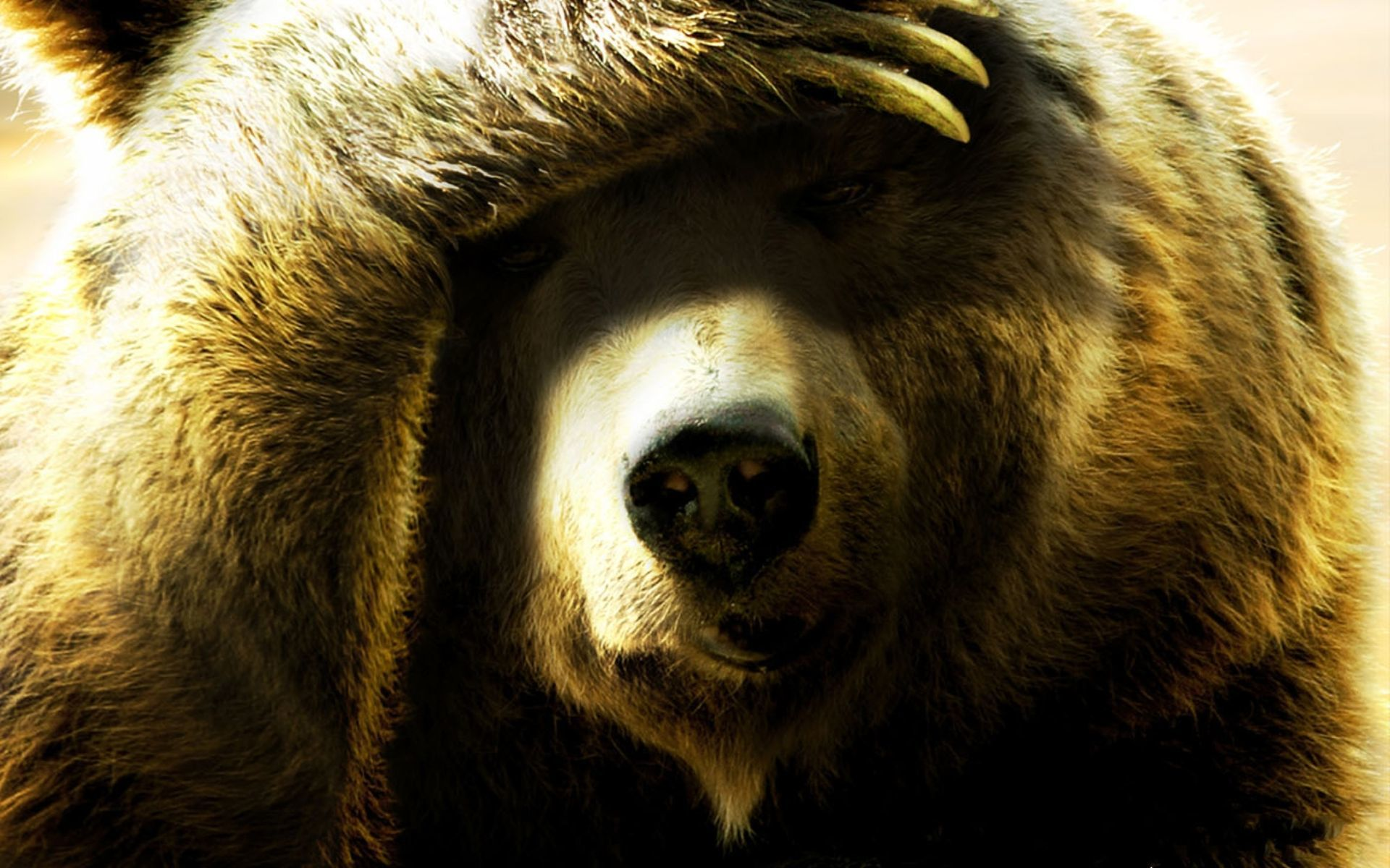картинка медведь подмигивает бывший хозяин очень