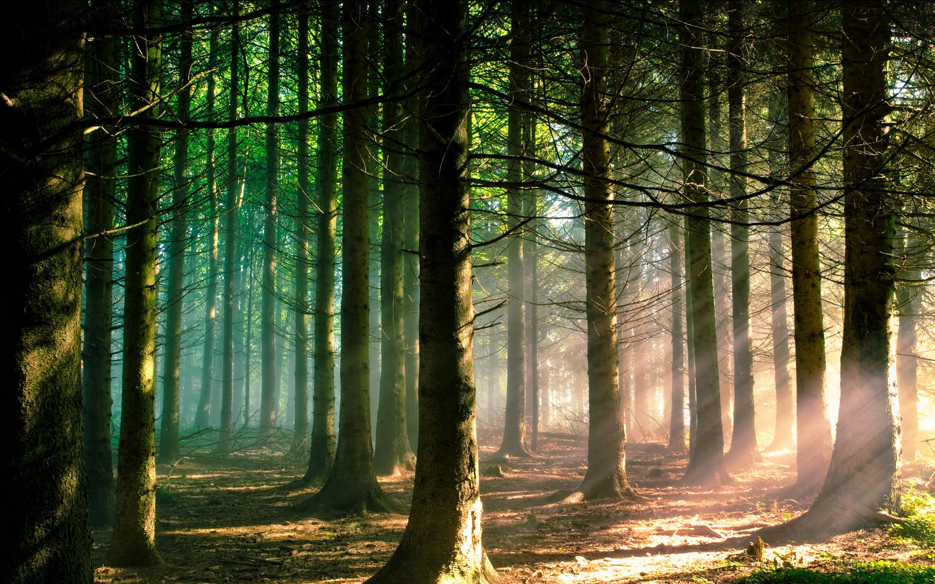 Лучи лес деревья  № 3847404 бесплатно
