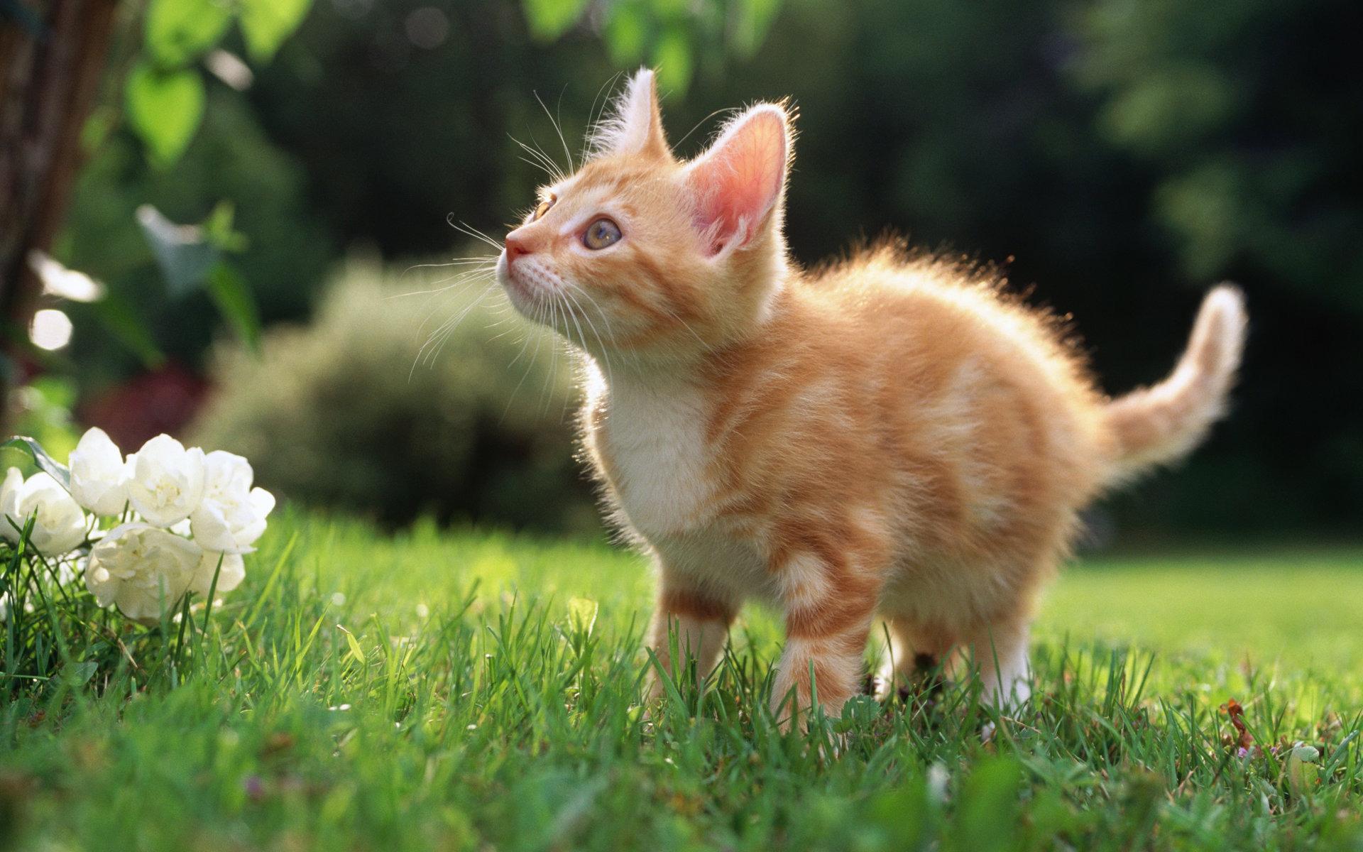 Котенок на травке  № 2954294 бесплатно
