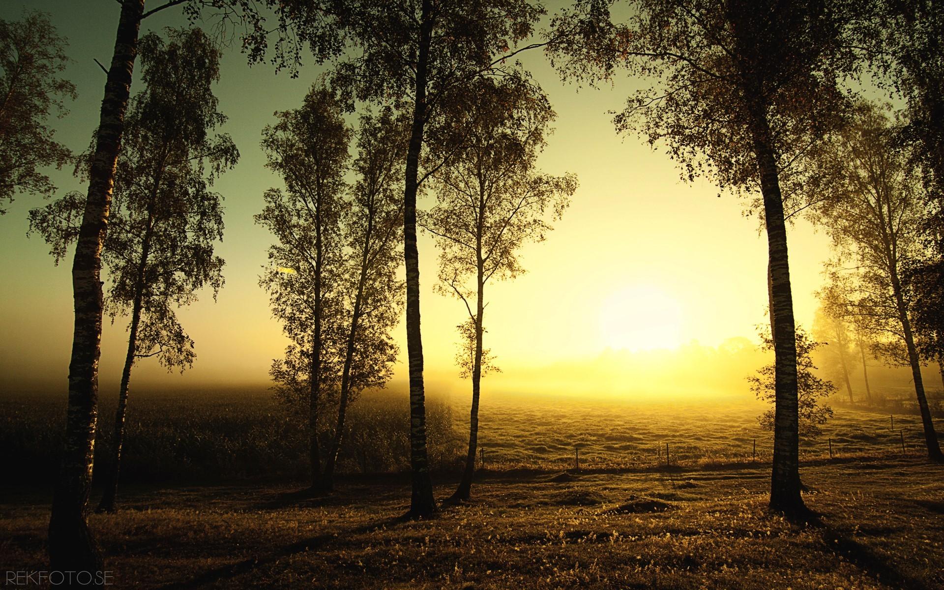 природа рассвет деревья  № 1158287 загрузить