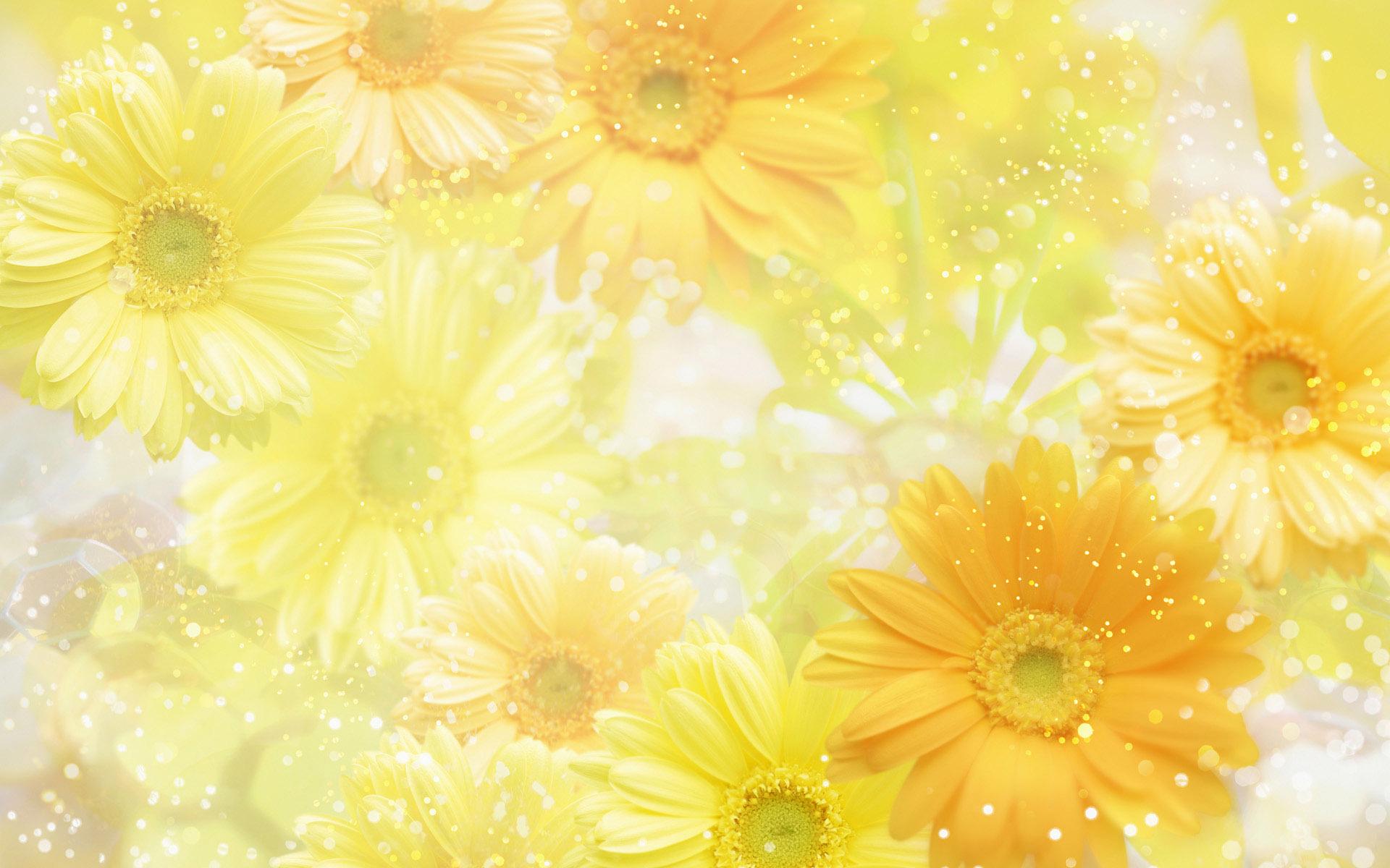 цветок желтый flower yellow  № 1246579  скачать
