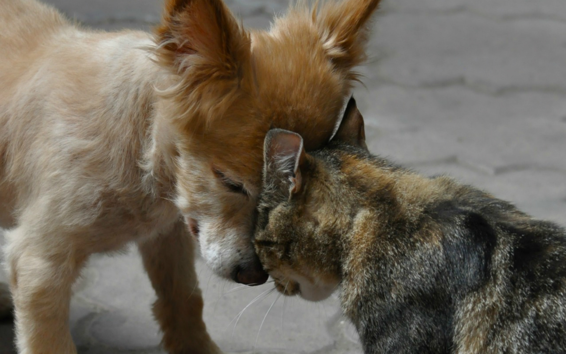 Картинки кота и собаки дружба, поздравительную