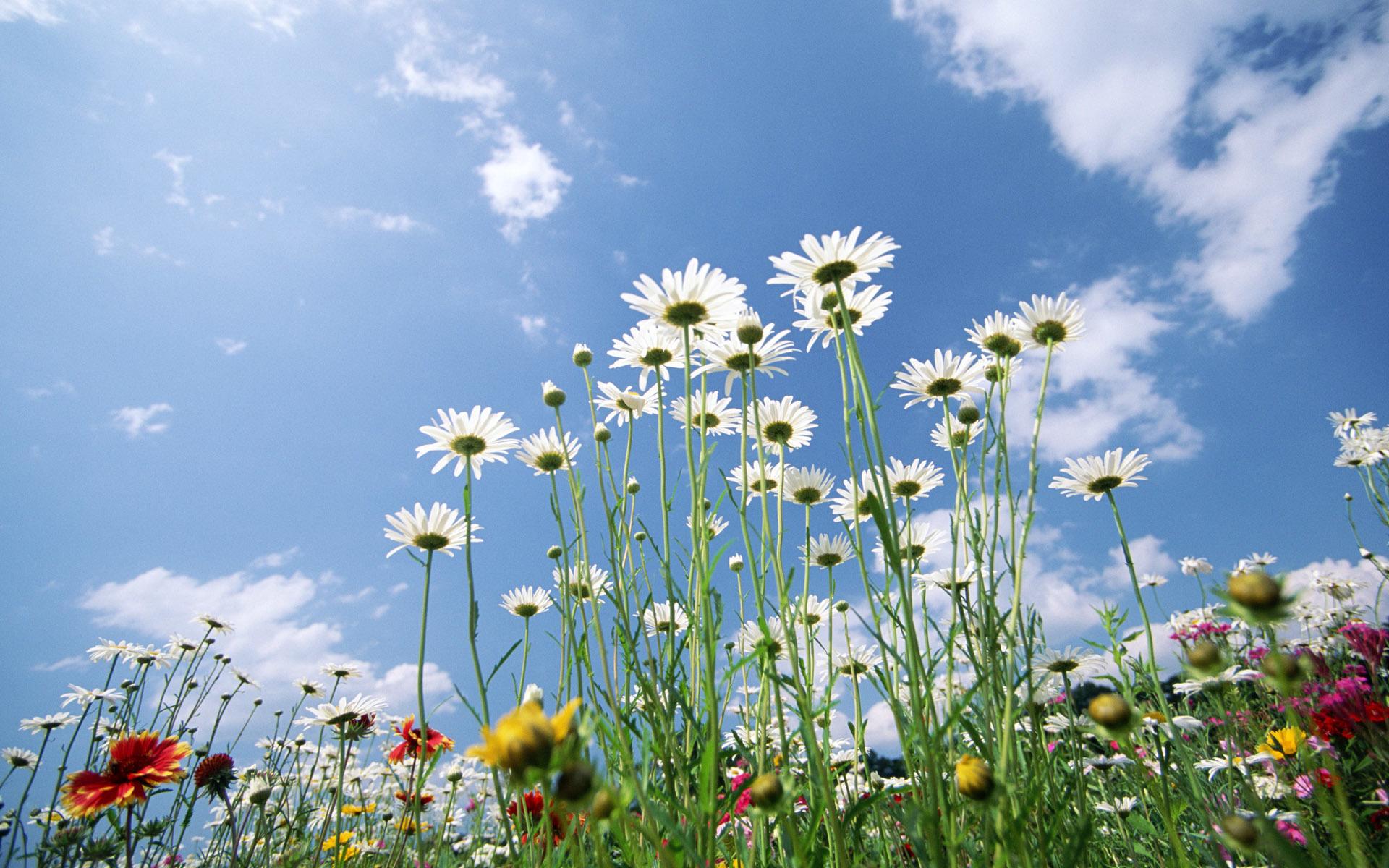стихи здравствуй лето в ромашковом поле месяц июль будет денег тебя