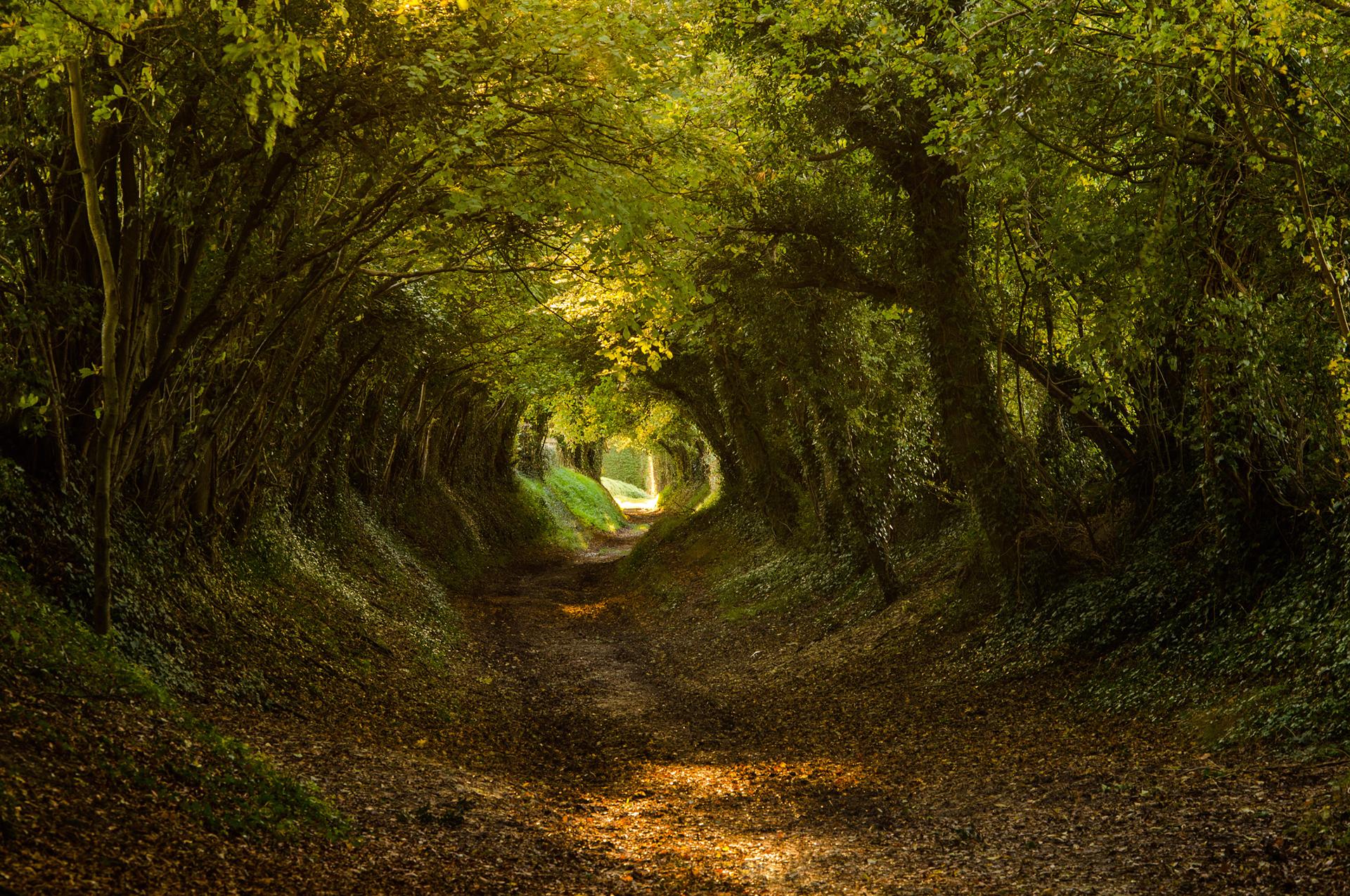 природа деревья лес тропа  № 1206324  скачать