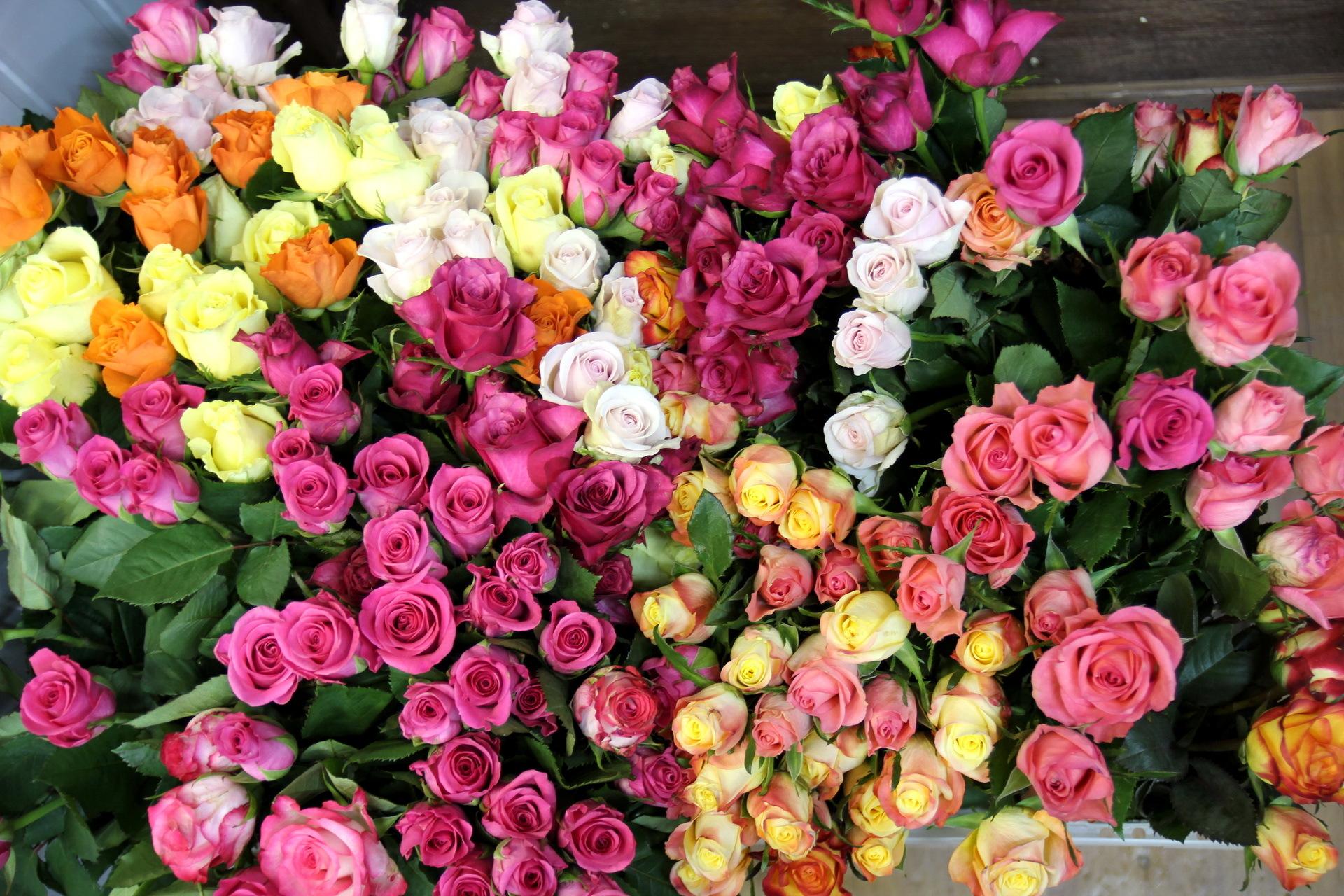 цветок букет
