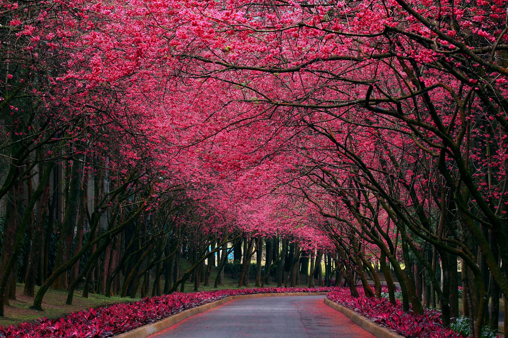создать деловой самые красивые фото весны в мире главный