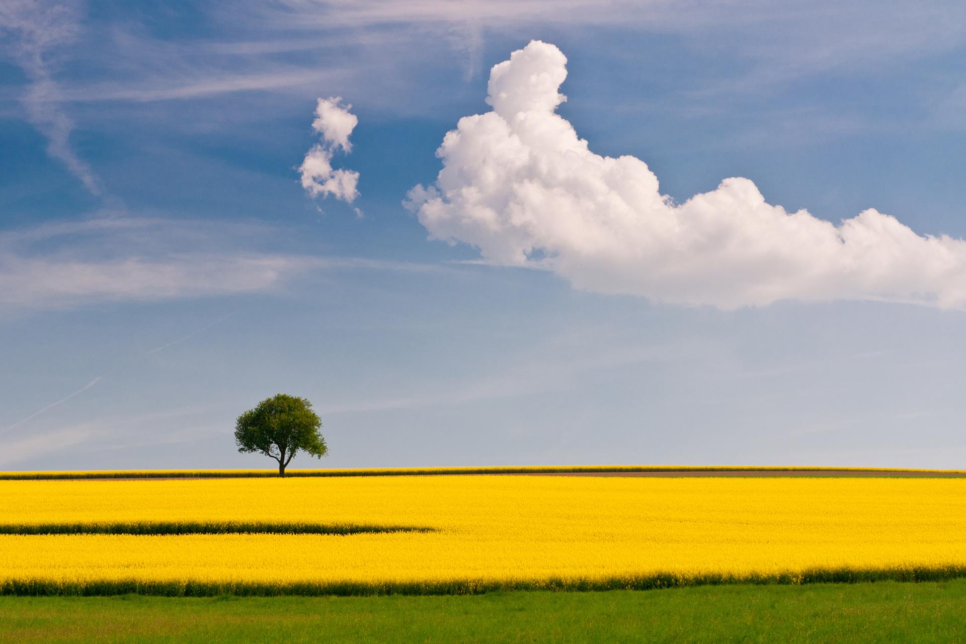 природа небо облака деревья поле nature the sky clouds trees field  № 243736 без смс