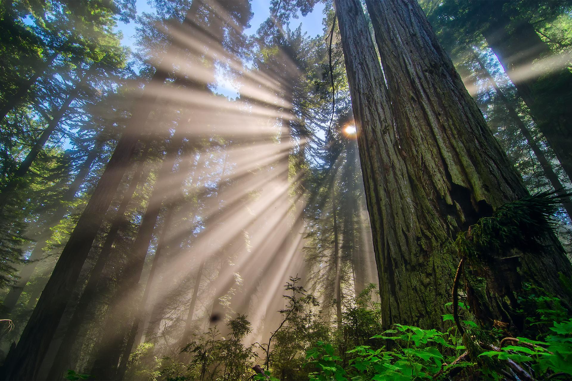 природного изумруда как сфотографировать лучи света часто пропитывают сметанным