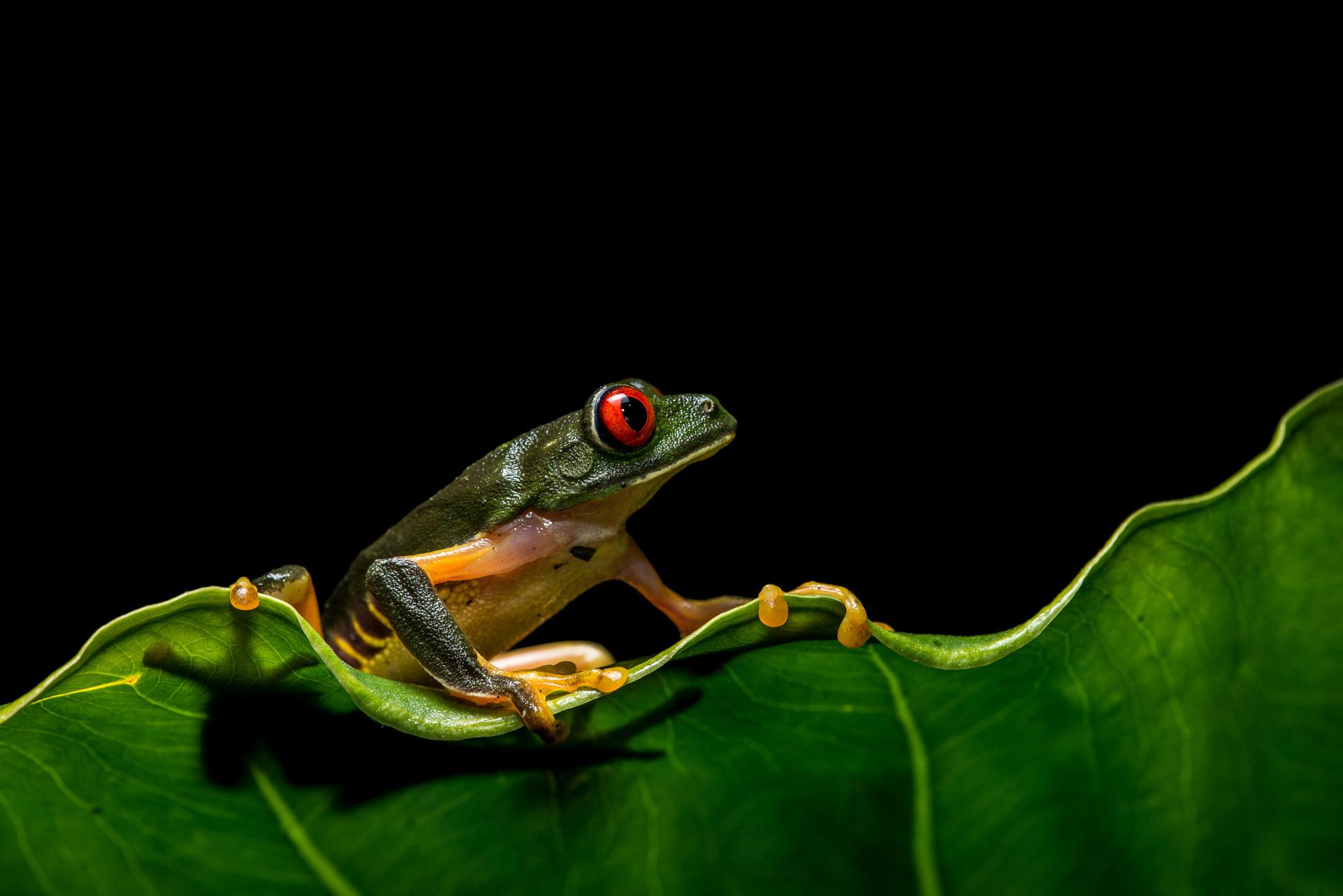 красноярском доме картинки на телефон с жабами фотоателье птичка адрес