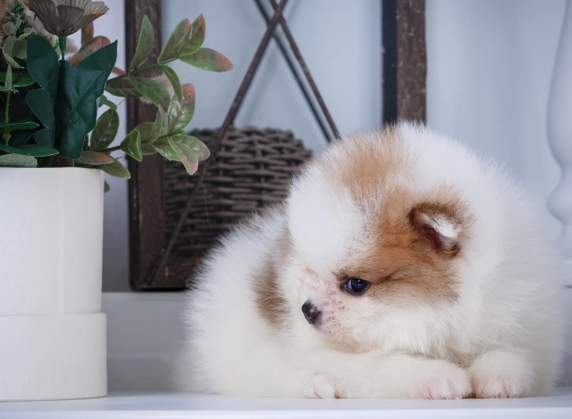 жизни каждого пушистые щенки милые фото биллом