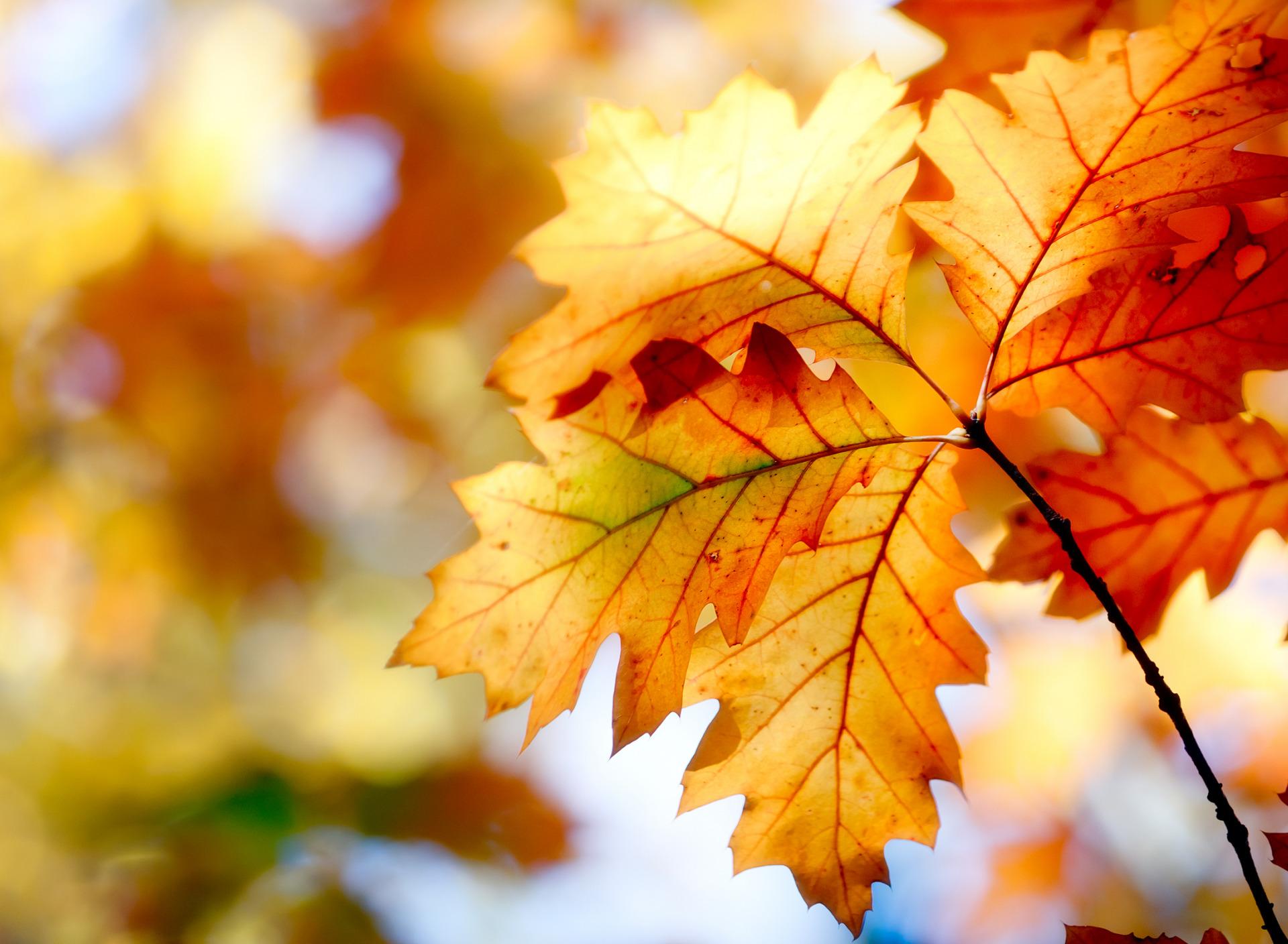 Картинки осенние листья сентября