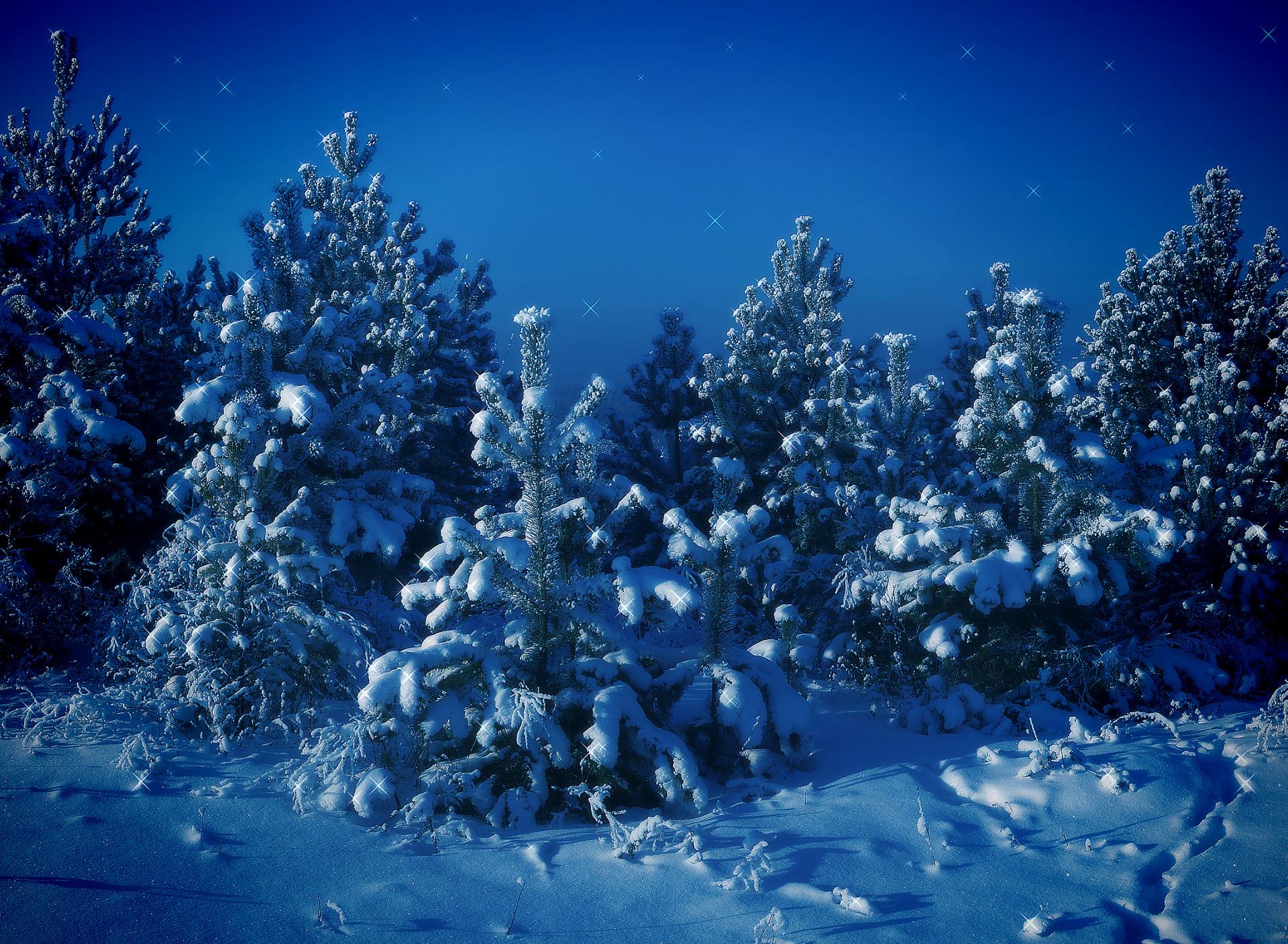 картинки ночь лес новый год те, кто после