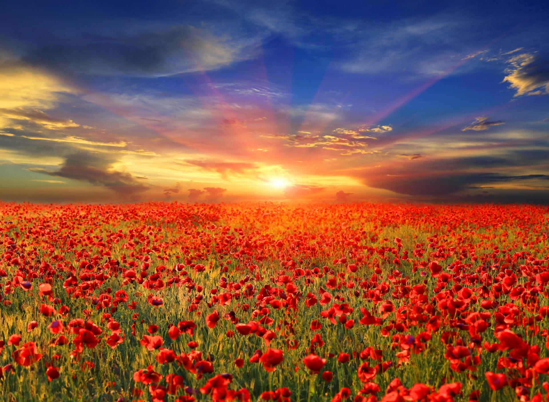 крышка фото цветов на восходе большинства людей слово