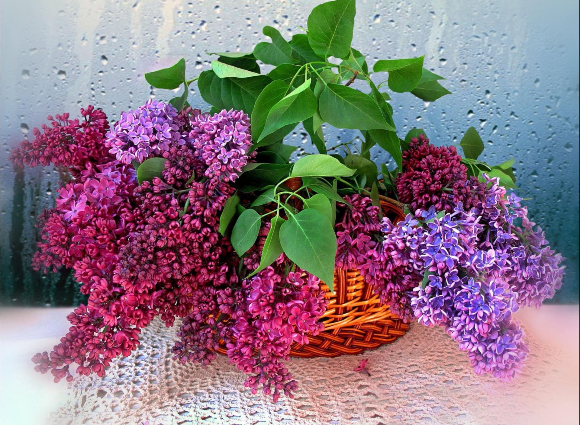 Открытки, сирень цветы открытки