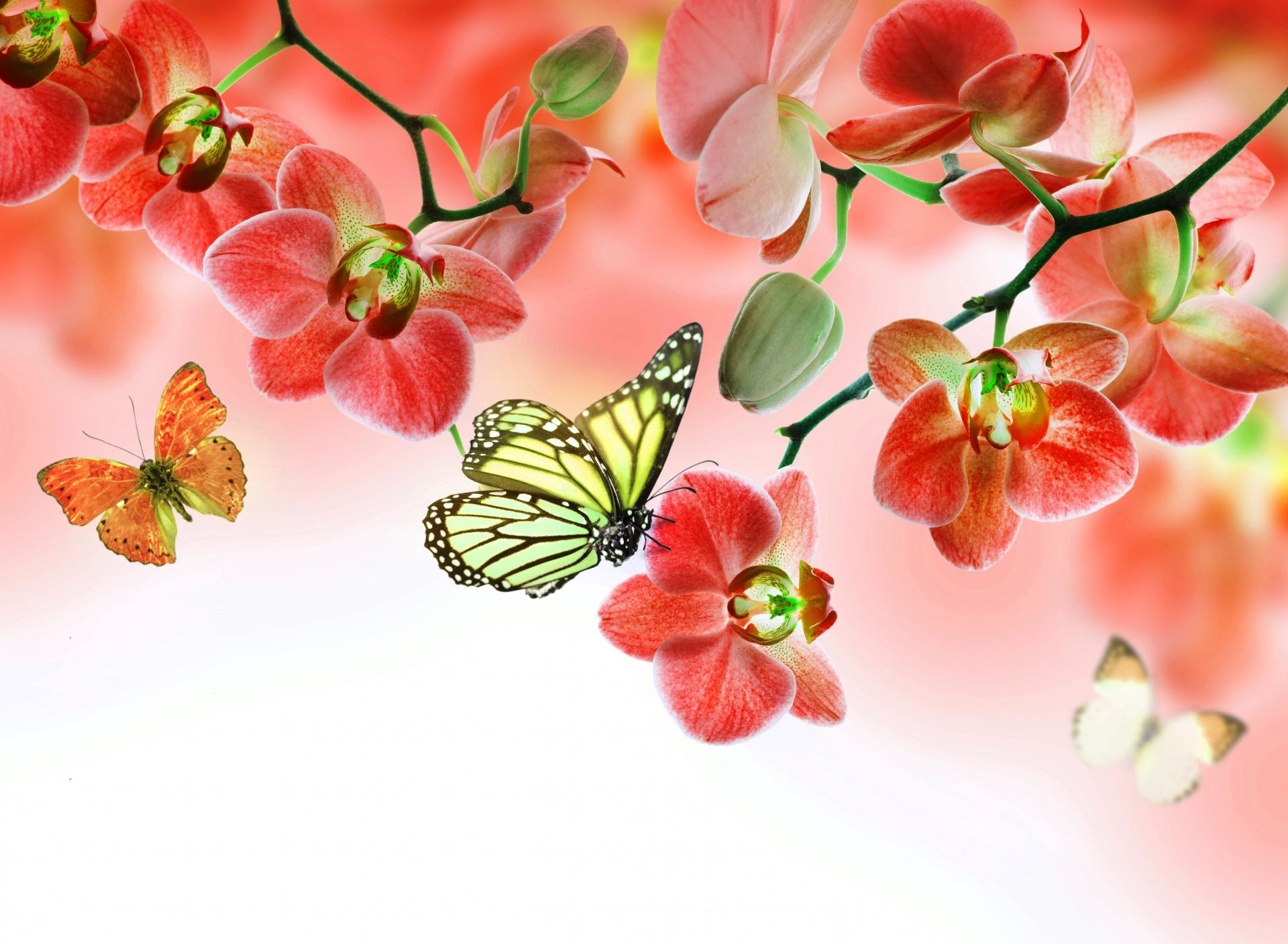 картинки с цветами большого разрешения для печати
