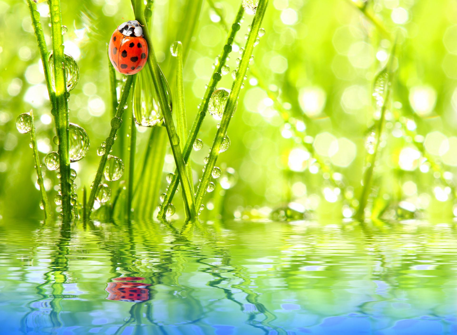 способны картинки лето природа роса необычно, если