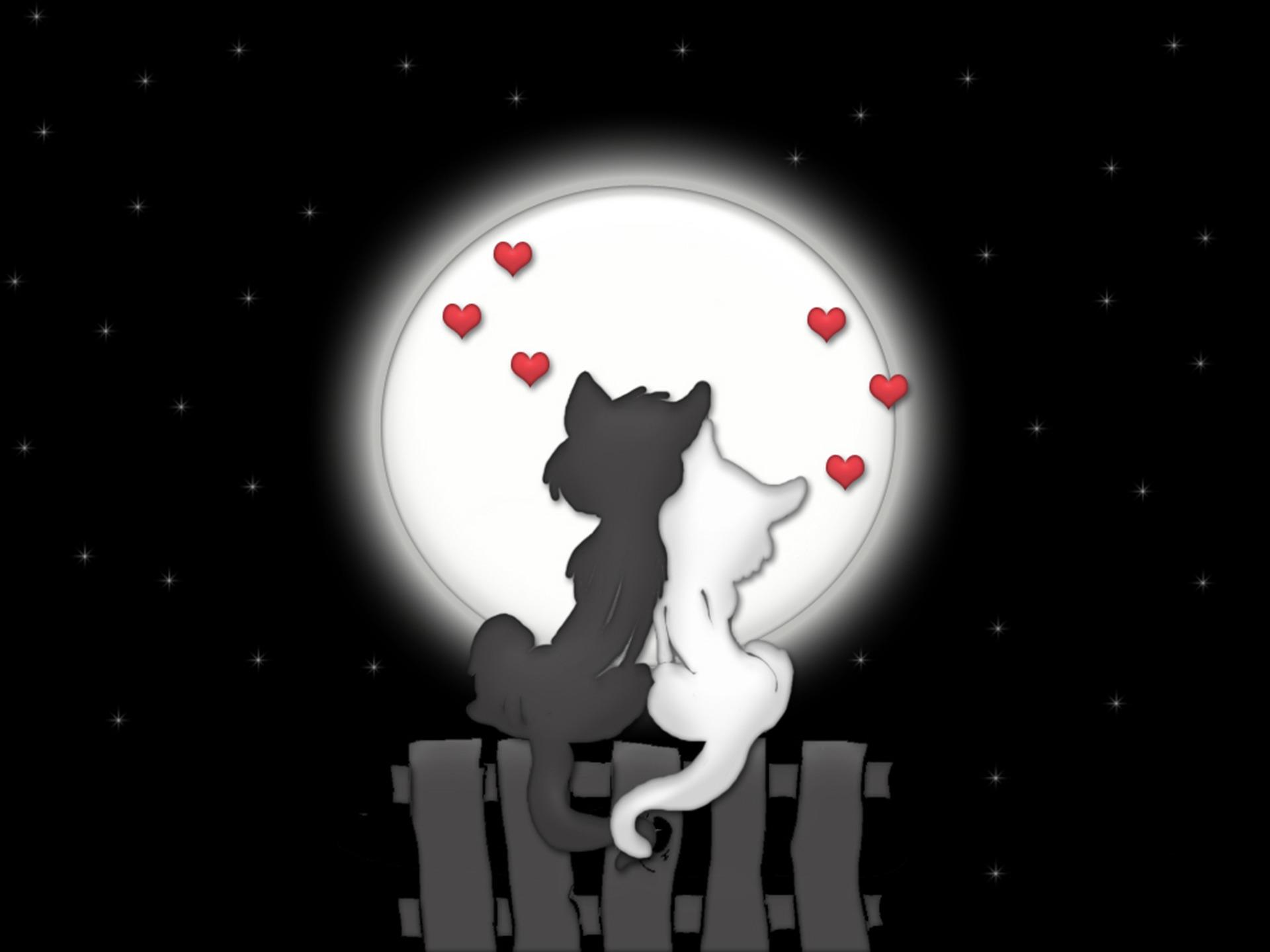 собак картинки с котиками про любовь Мунасыпова Андрее