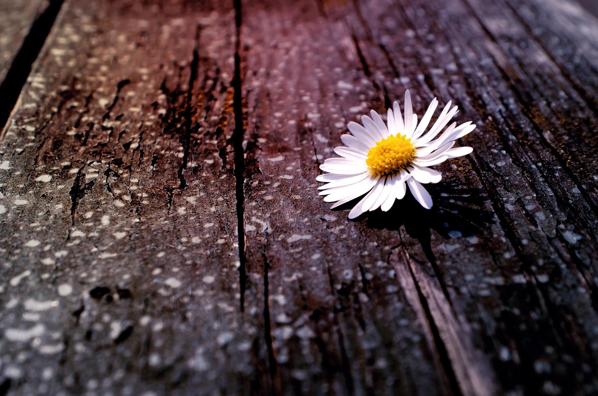 Пусть все, открытки одинокого цветка