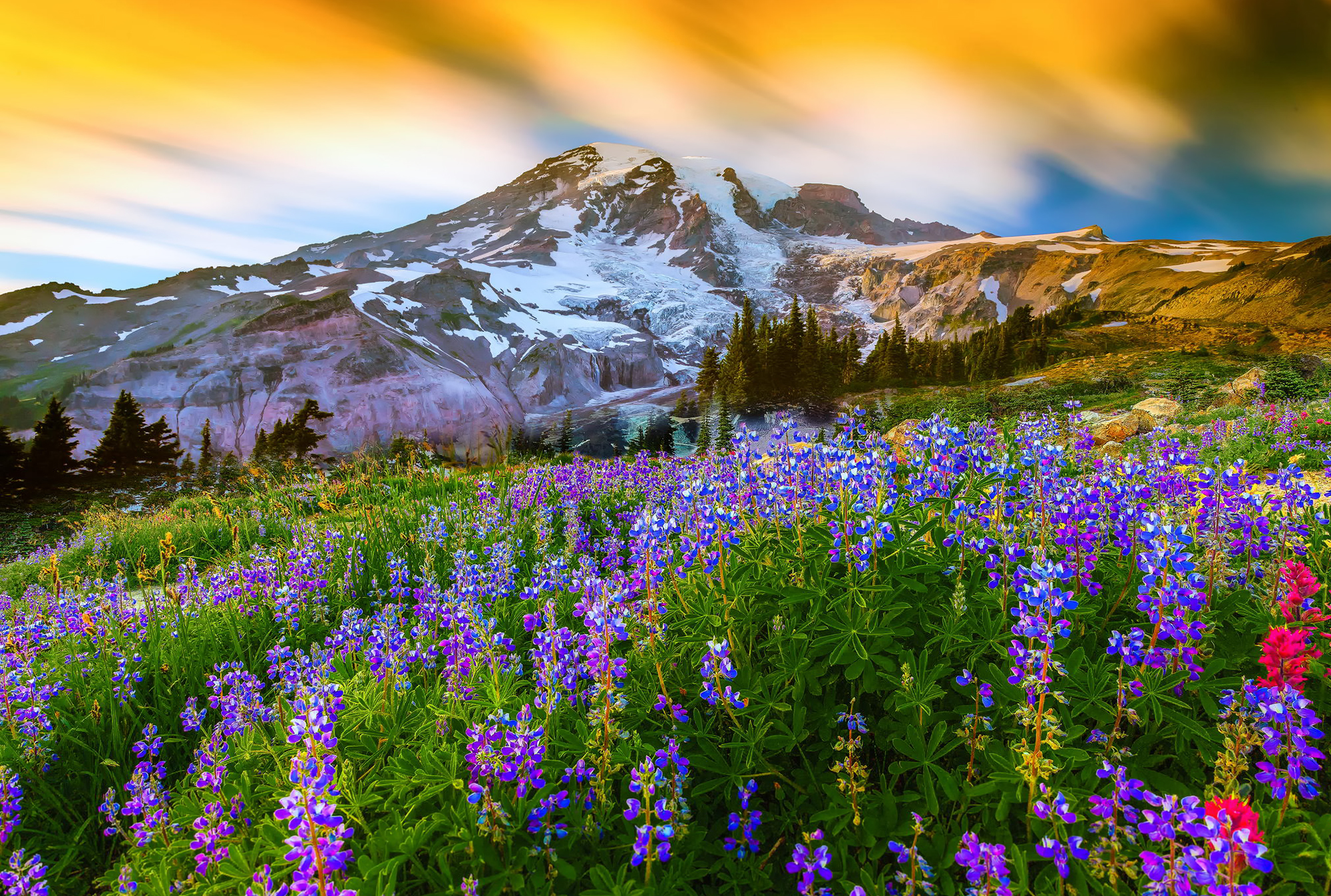 смотреть картинки с пейзажем и цветами отделяют мяса