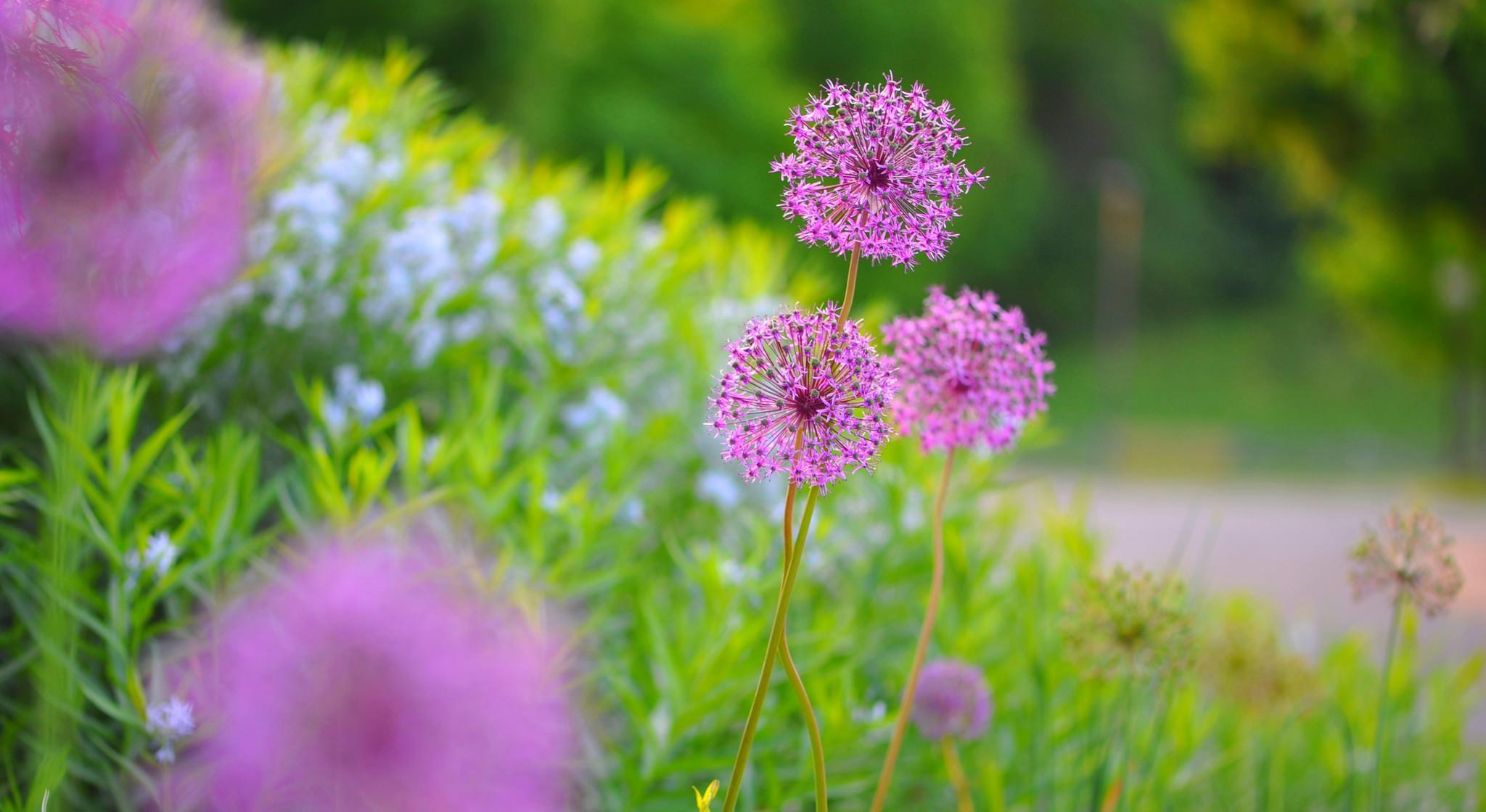 цветок, макро, розовый, природа, растения  № 695965 бесплатно