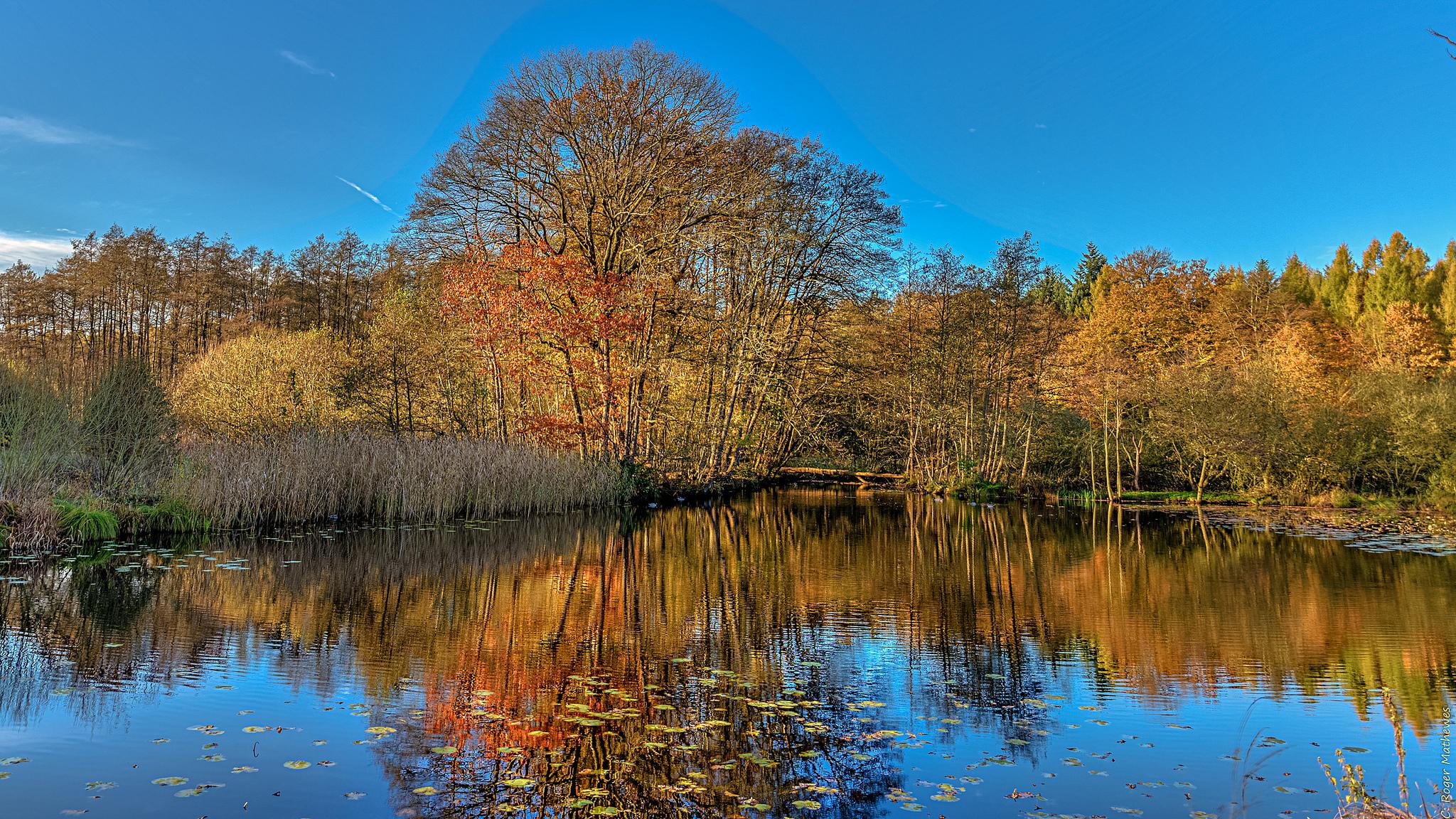 природа озеро деревья небо оссень  № 2535965 бесплатно