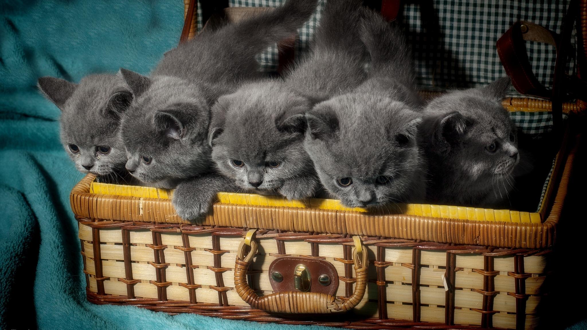 Группа котята