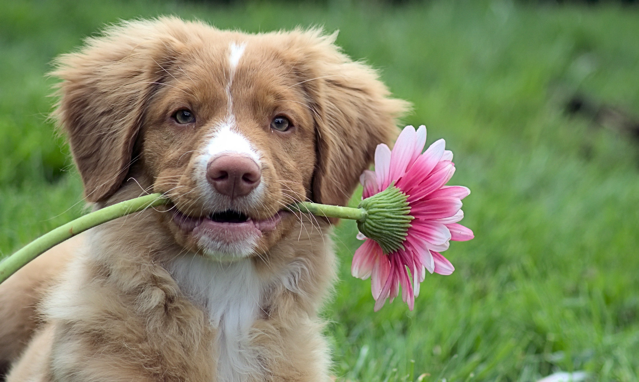 Картинки животных с цветами в зубах фото, ретро победа картинки